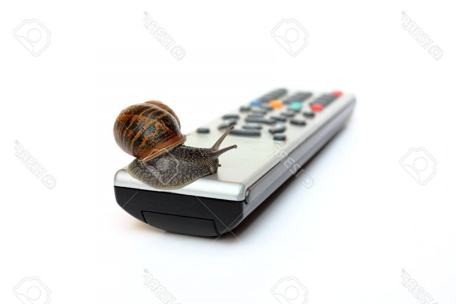 Helix Vectors TV: Photocommon Garden Snail Helix Aspersa On Tv Remote Control Isolated