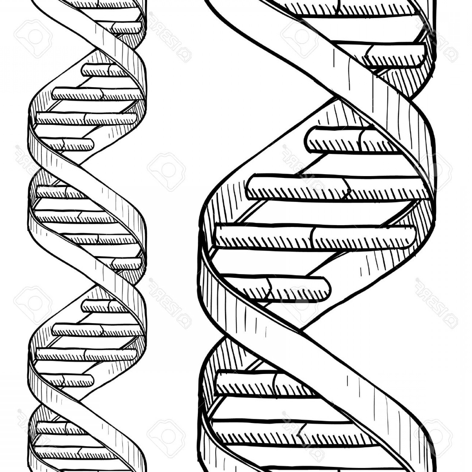 DNA Helix Vector: Photodoodle Style Dna Double Helix Seamless Vector Background Or Border