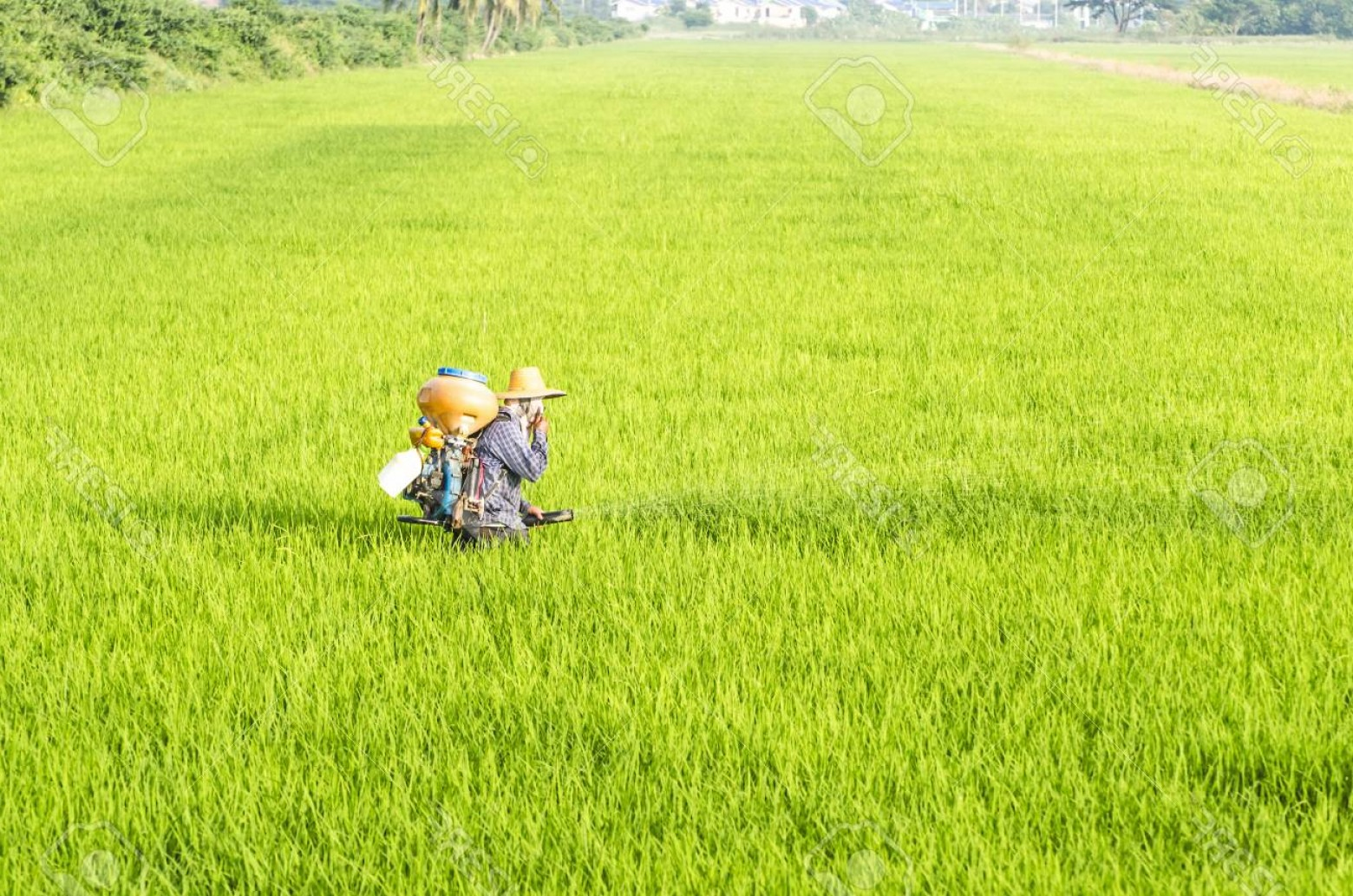 Vector 300 Fertilizer Spreading: Photofarmer Spreading Fertilizer In Rice Field