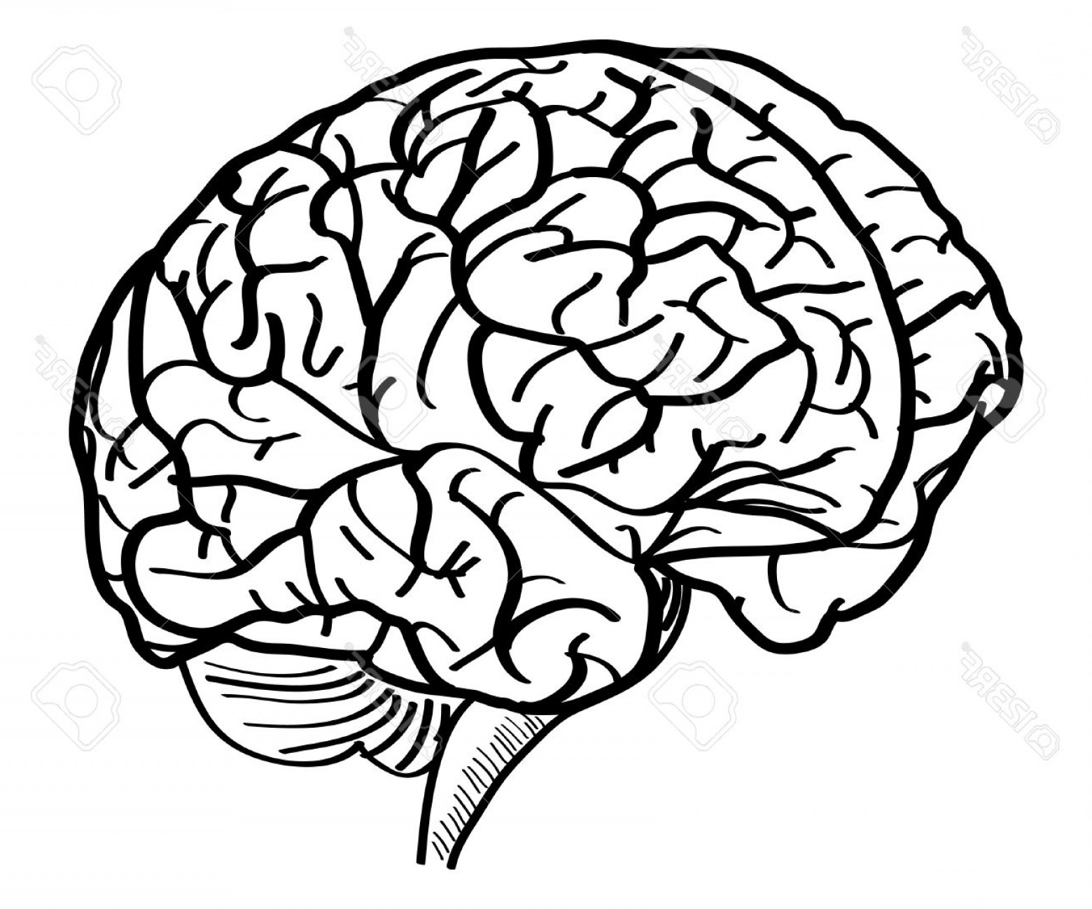 Brain Vector Art: Photohuman Brain Vector Outline Sketched Up Vector Illustration