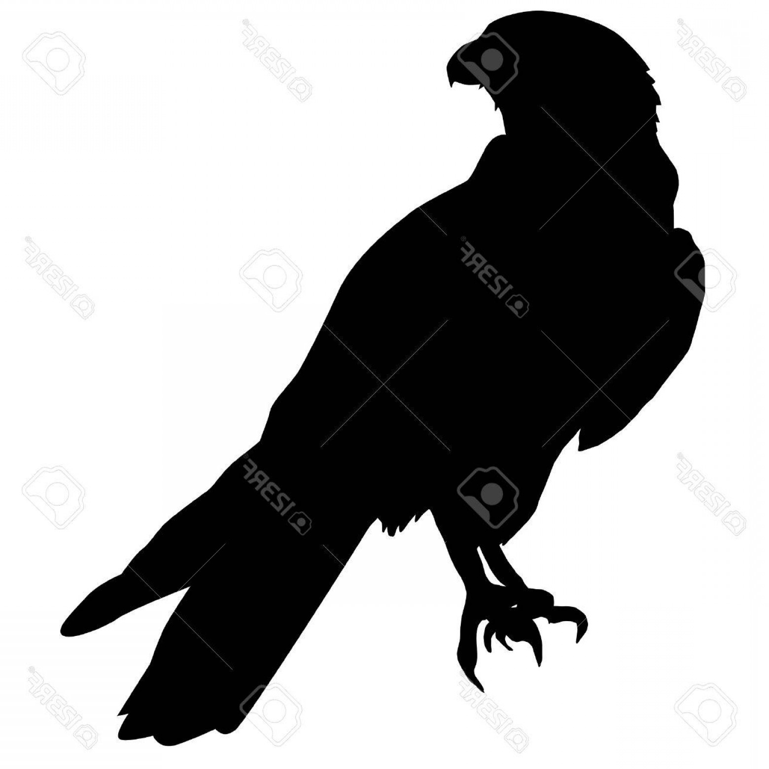 Falcon Silhouette Vector: Photoillustration In Style Of Black Silhouette Of Falcon