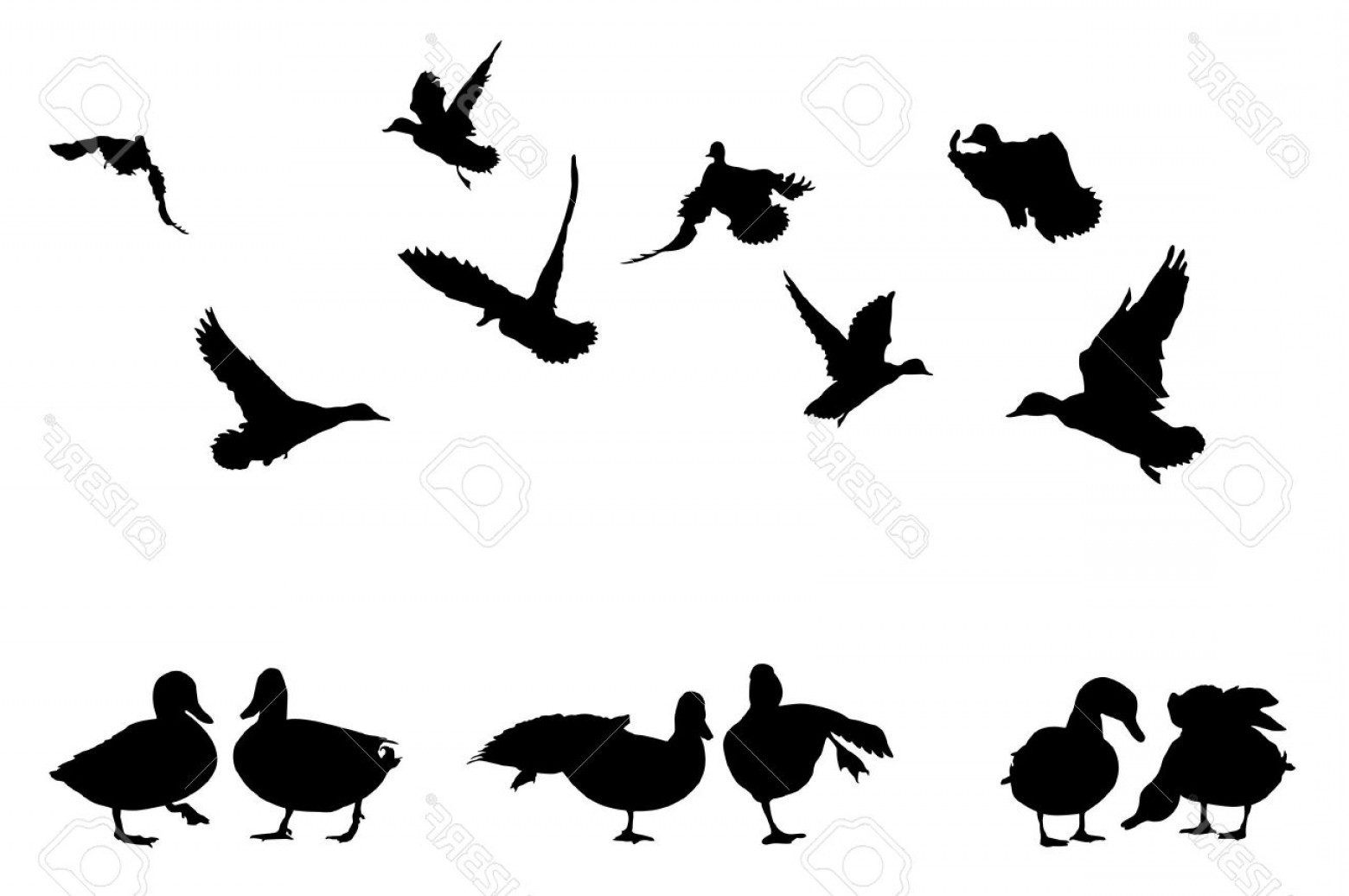 Flying Duck Outline Vector: Photomallard Duck Silhouettes Collection For Designers