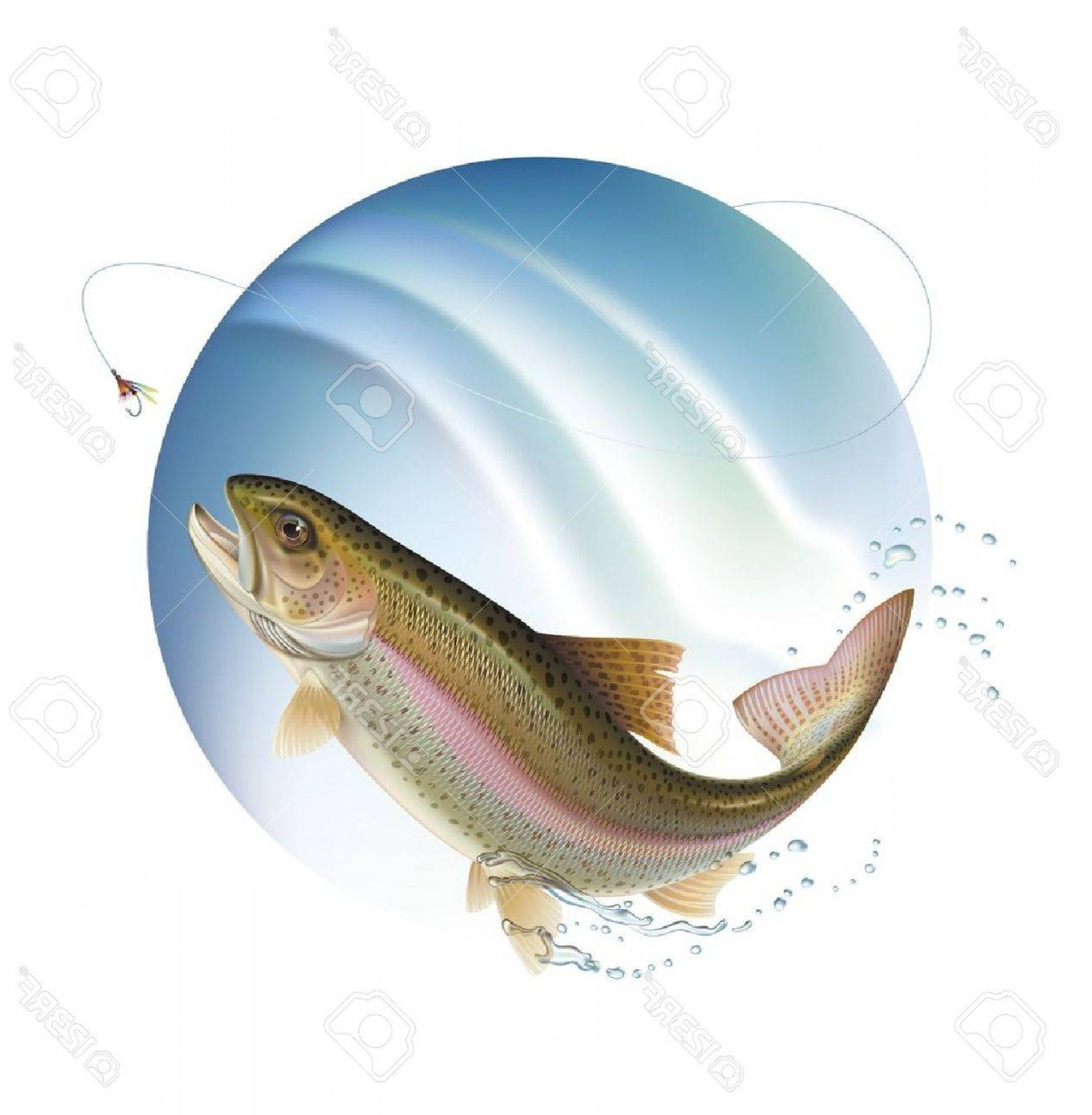 Speckled Trout Vector: Photorainbow Trout Is Jumping For A Bait With Water Sprays Around Vector Illustration