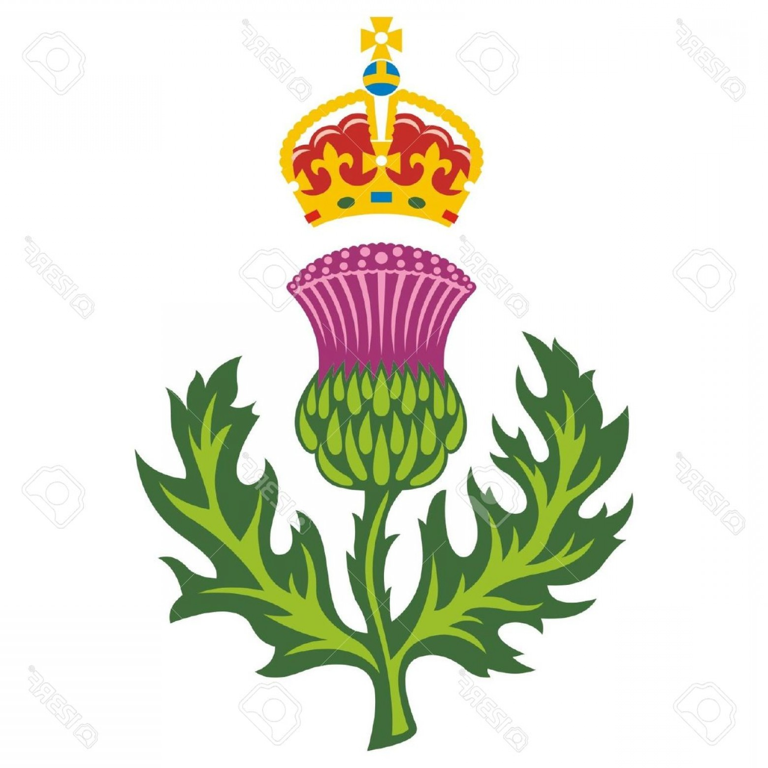 Scotland Heraldic Vector Graphic: Photoscottish Thistle Badge Of Scotland Vector