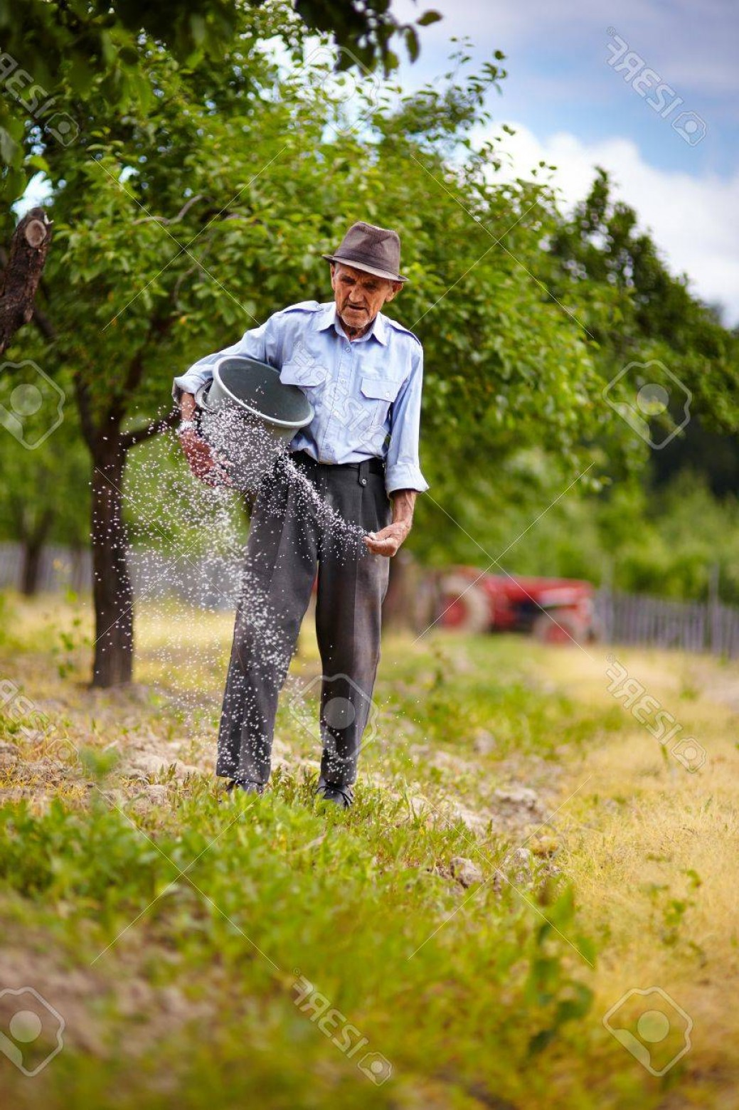 Vector 300 Fertilizer Spreading: Photosenior Farmer Doing Seasonal Work Spreading Fertilizer In A Plum Trees Orchard