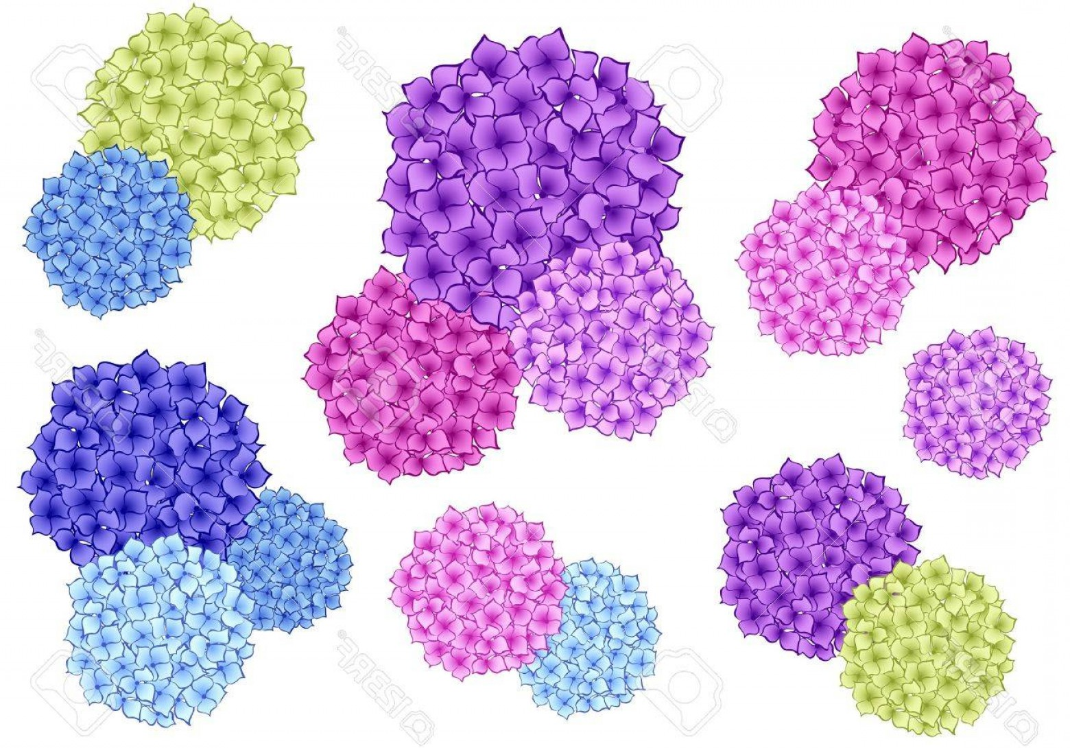 Hydrangea Vector Graphics: Photoset Of Colorful Hydrangea Flowers Vector Design Elements
