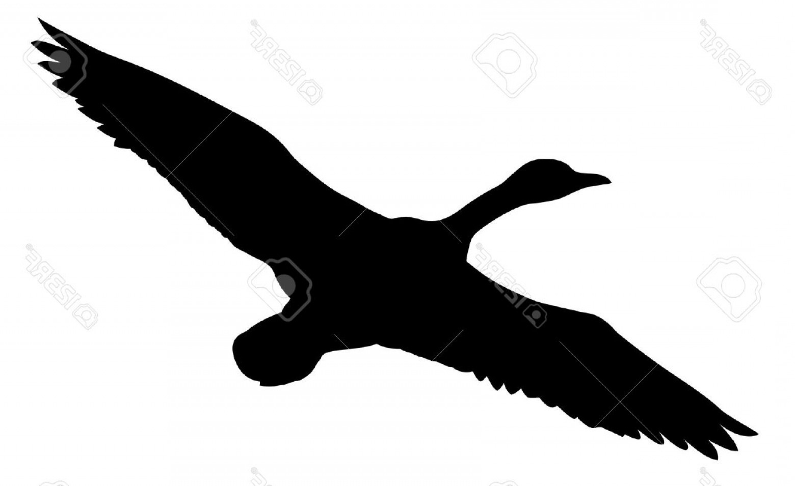 Flying Duck Outline Vector: Photosilhouette Flying Ducks On White Background