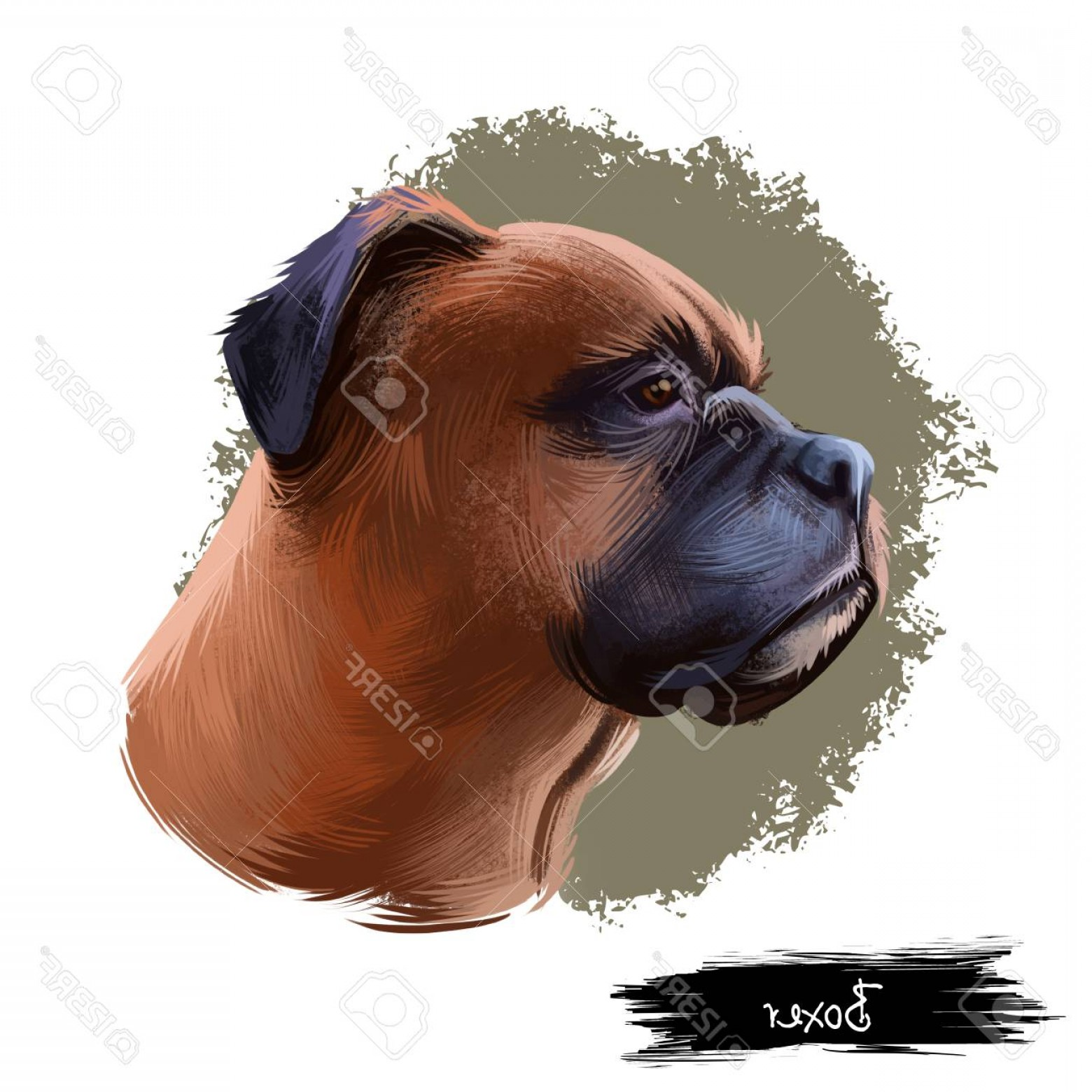 Double Boxer Dog Vector: Photostock Illustration Boxer Dog Breed Isolated On White Background Digital Art Illustration Medium Sized Short Haired Bree