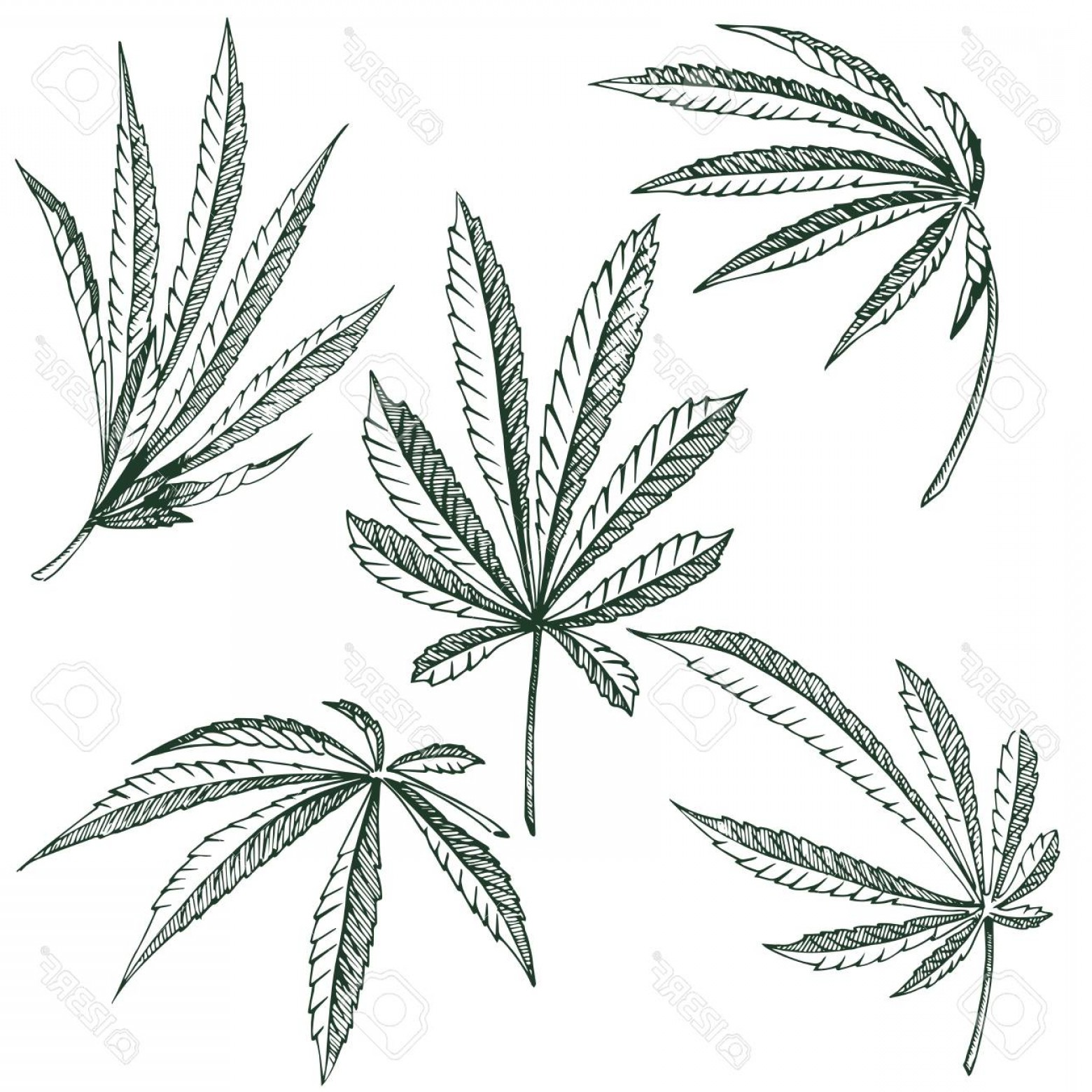Black And White Vector Image Of Weed Plants: Photostock Illustration Vector Hemp Plant Illustrations Set Of Leaves Of Black And White Cannabis Isolated Clip Art