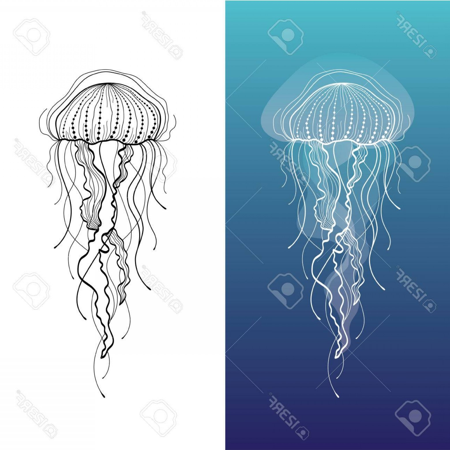 Jelly Fish Graphic Vector: Photostock Vector Abstract Graphic Illustration Of Jellyfish In Vector