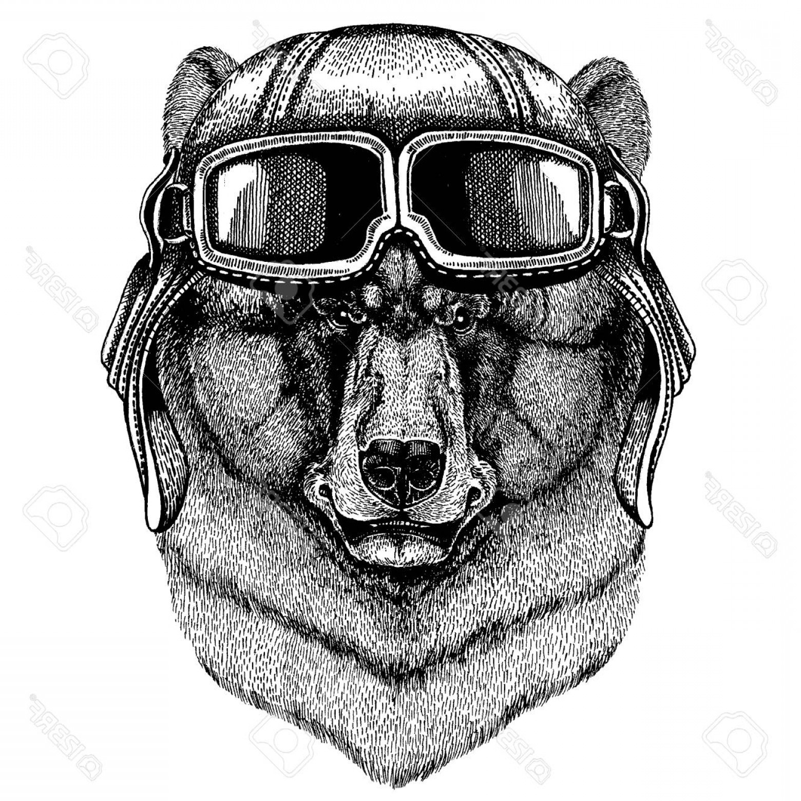 Aviator Vector Ink Drawings: Photostock Vector Animal Wearing Aviator Helmet With Glasses Vector Picture Black Bear Hand Drawn Illustration For Tat