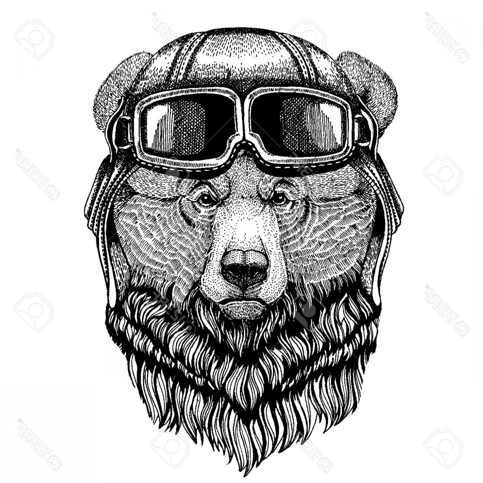 Aviator Vector Ink Drawings: Photostock Vector Animal Wearing Aviator Helmet With Glasses Vector Picture Grizzly Bear Big Wild Bear Hand Drawn Imag