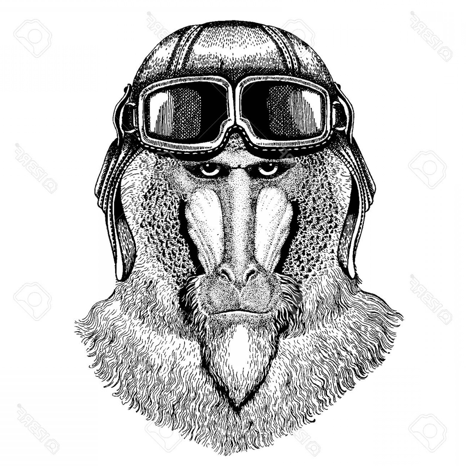 Aviator Vector Ink Drawings: Photostock Vector Animal Wearing Aviator Helmet With Glasses Vector Picture Monkey Baboon Dog Ape Ape Hand Drawn Image