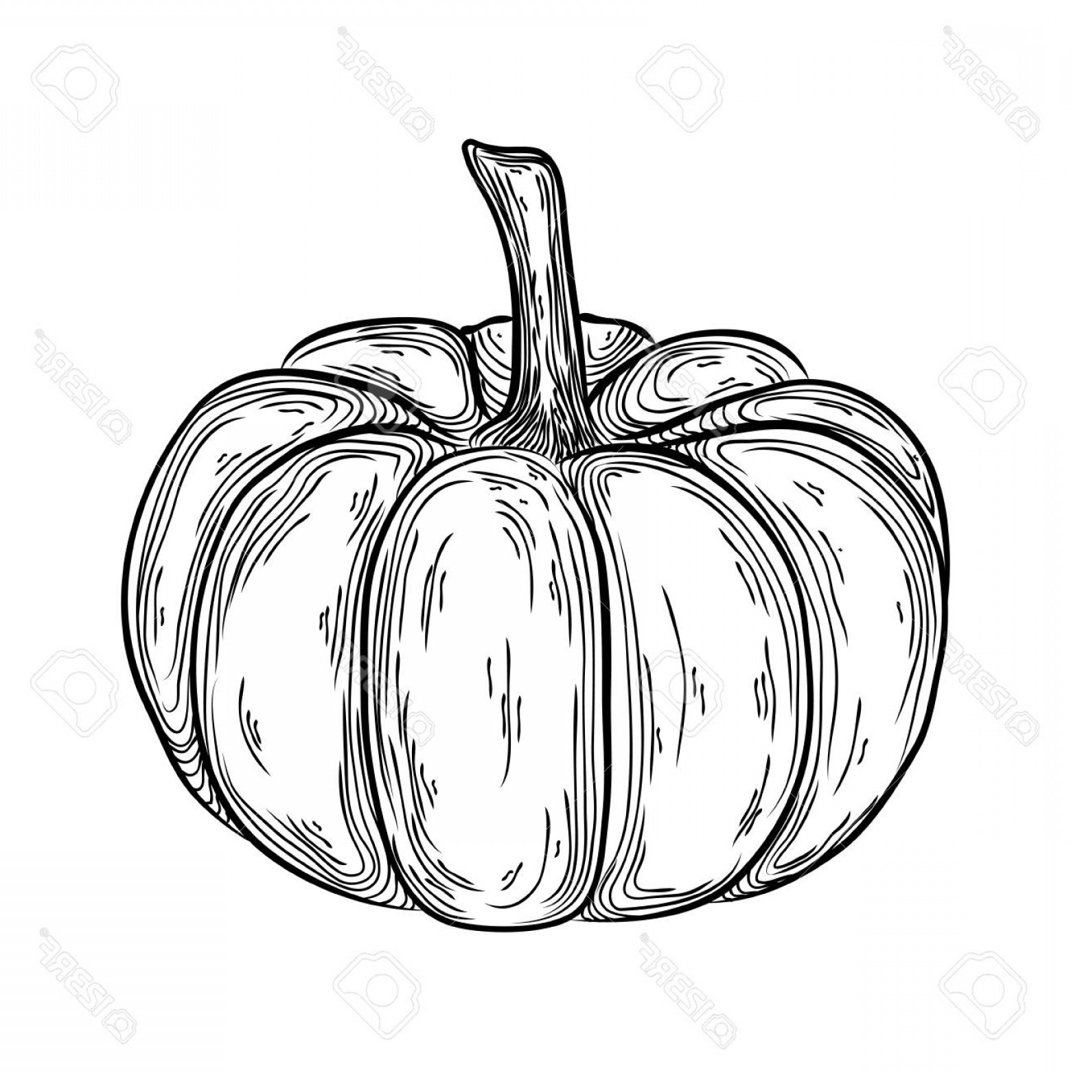 Pumpkin Outline Vector Art: Photostock Vector Autumn Pumpkin Outline Hand Drawn Illustration Graphic Icon Linear Drawing