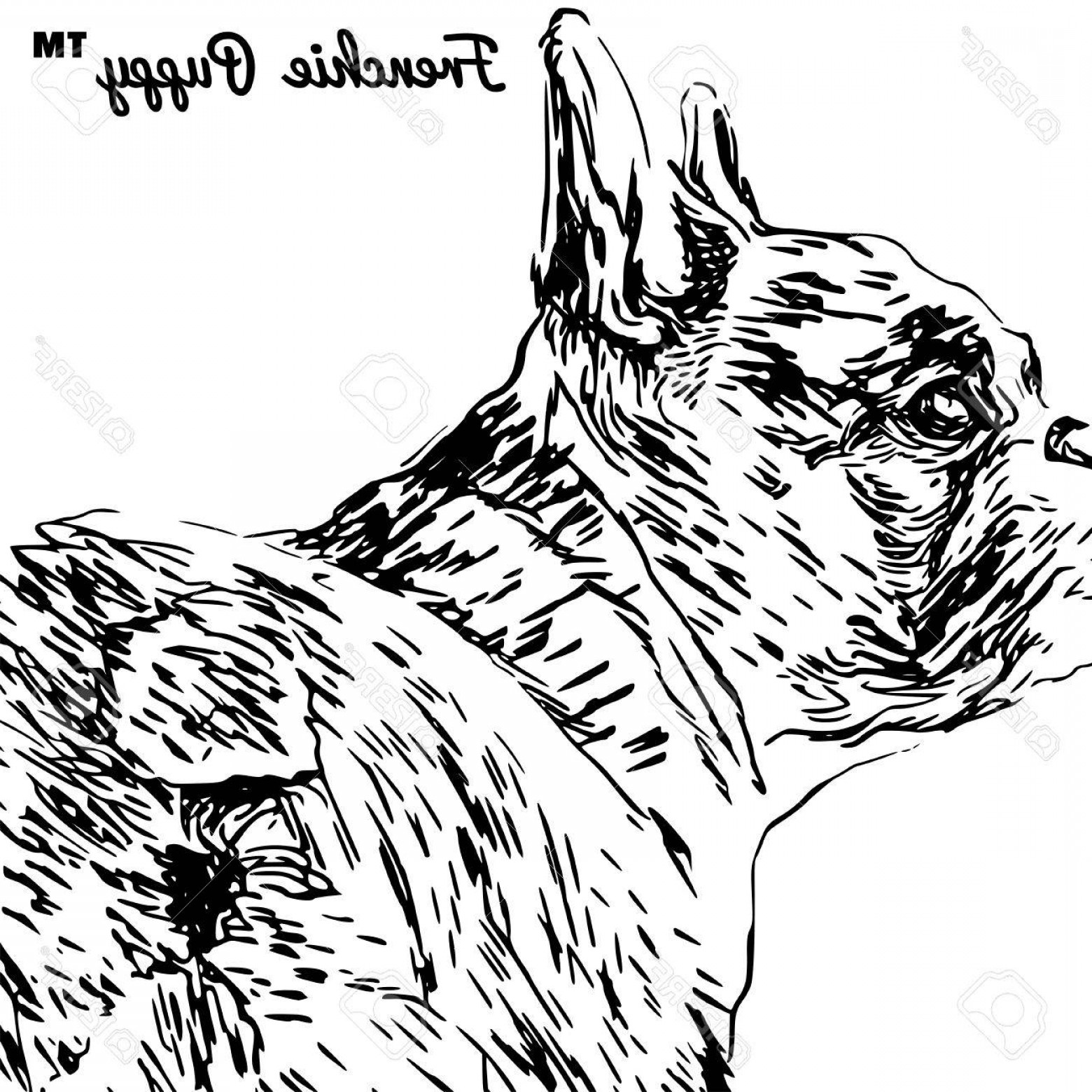 Bulldog Vector Art: Photostock Vector Backside Portrait Of A French Bulldog