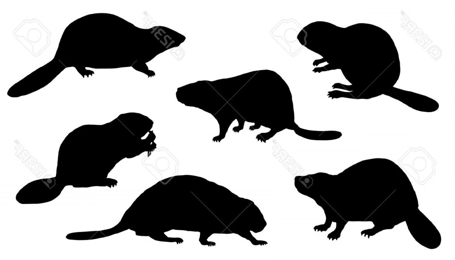 Vector Silhouette Beaver: Photostock Vector Beaver Silhouettes On The White Background