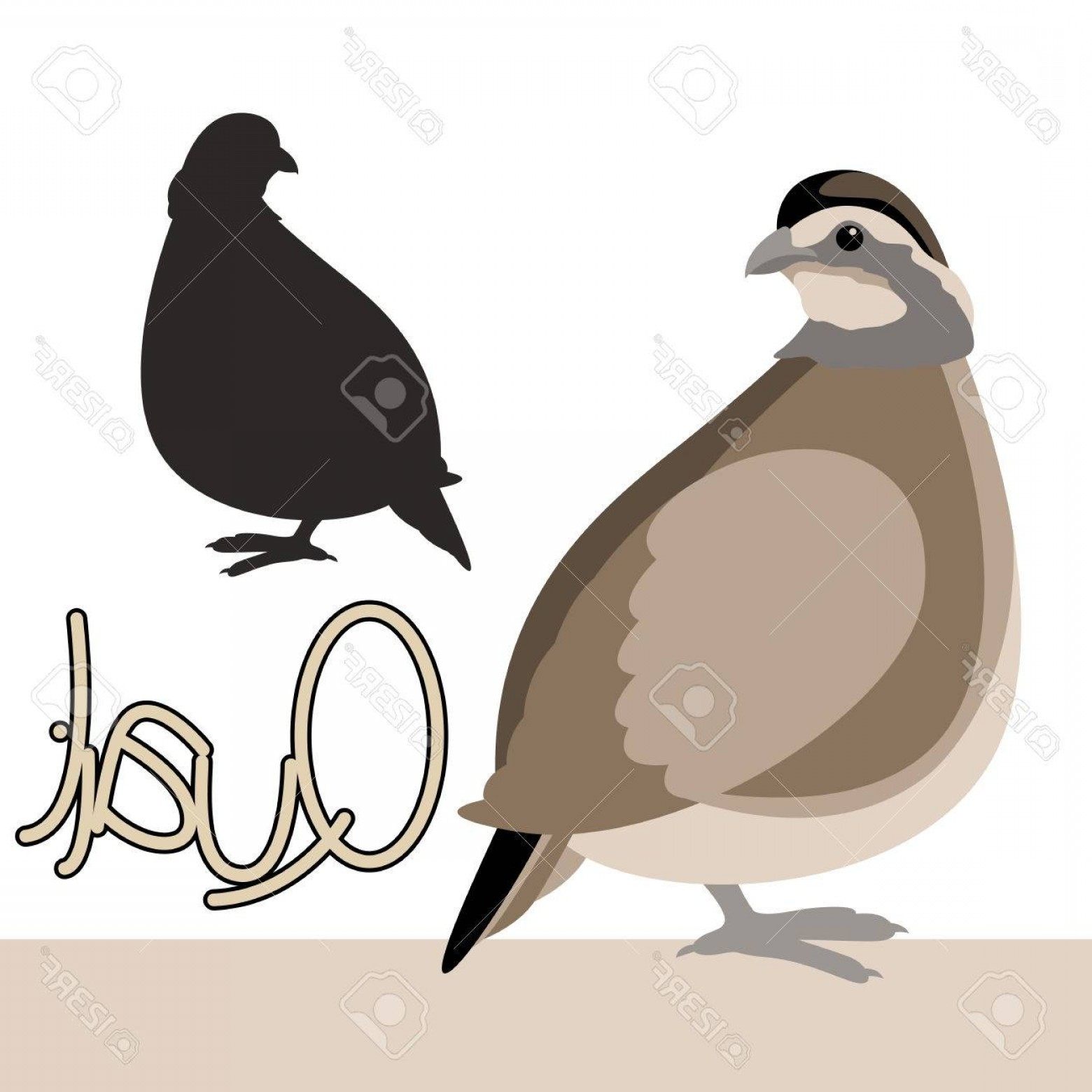 Quail Vector Art: Photostock Vector Bird Quail Vector Illustration Style Flat Black Silhouette