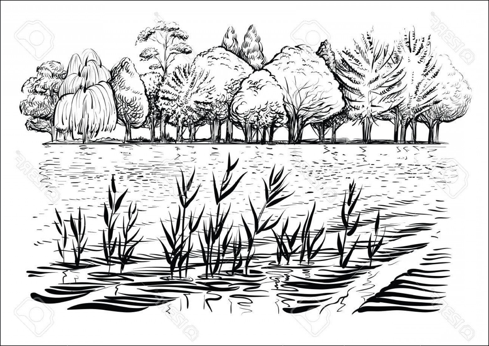 Vector Water Willow: Photostock Vector Black And White Vector Illustration Of River Landscape With Trees Water Waves And Reflexion