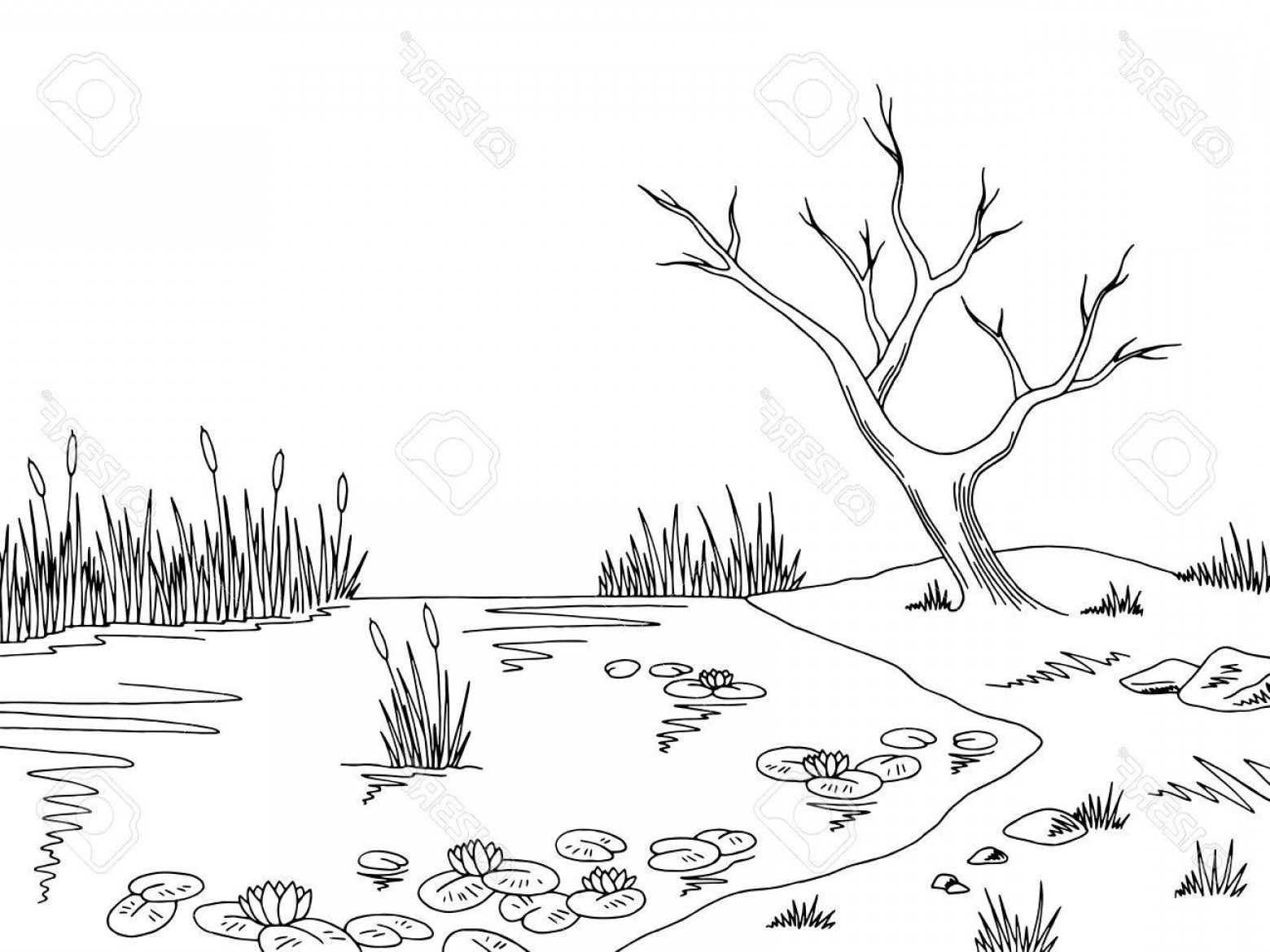 Swamp Vector Art: Photostock Vector Bog Swamp Graphic Black And White Sketch Illustration Vector