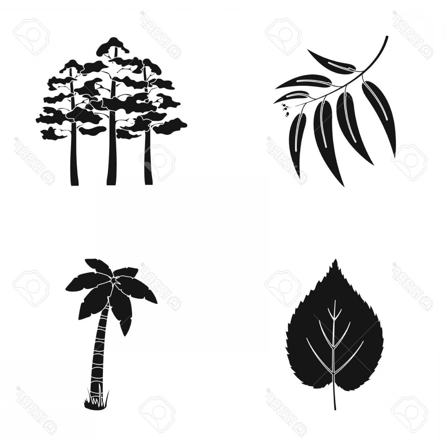 Pine Leaf Vector: Photostock Vector Branch Zucalyptus Pine Leaf Palm