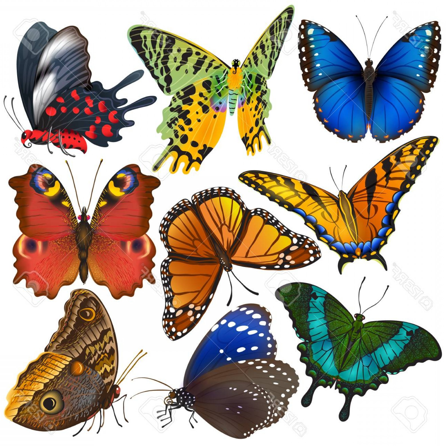 Real Butterfly Vector: Photostock Vector Butterfly Vector Colorful Insect Flying For Decoration And Beautiful Butterflies Wings Fly In Spring