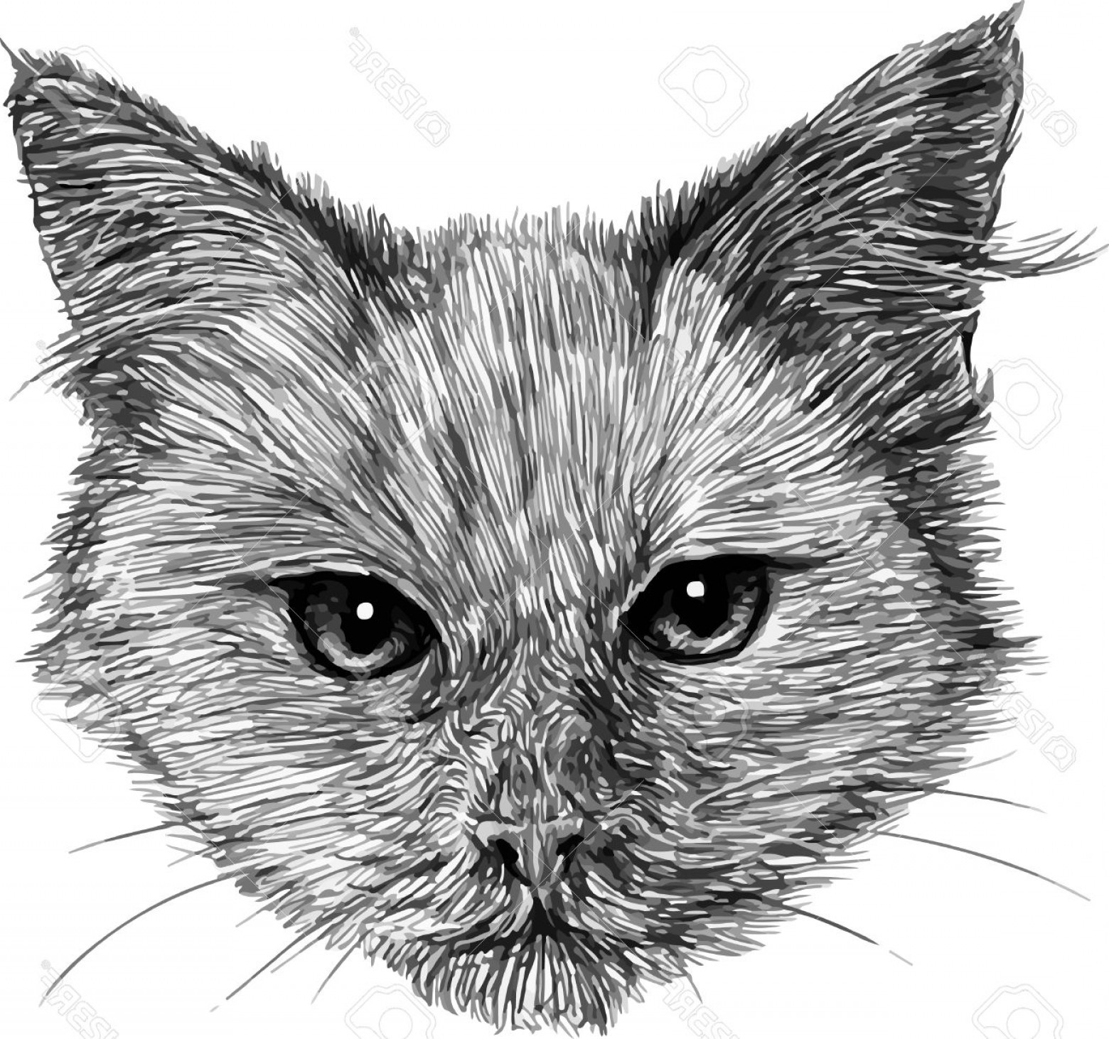 Malee Cat Head Silhouette Vector: Photostock Vector Cat Head Black And White Animal Drawing Illustration