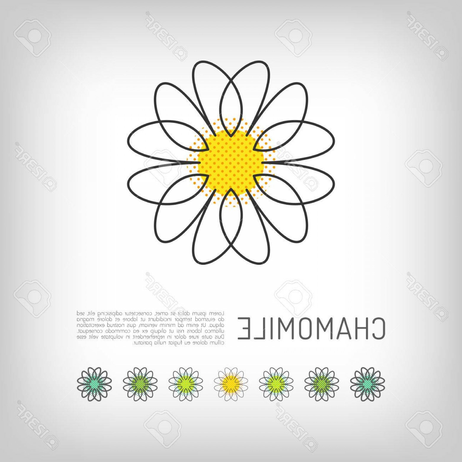 Simple Vector Daisy: Photostock Vector Chamomile Thin Line Art Icon Isolated Daisy Abstract Flower Design Simple Floral Modern Minimal Desi