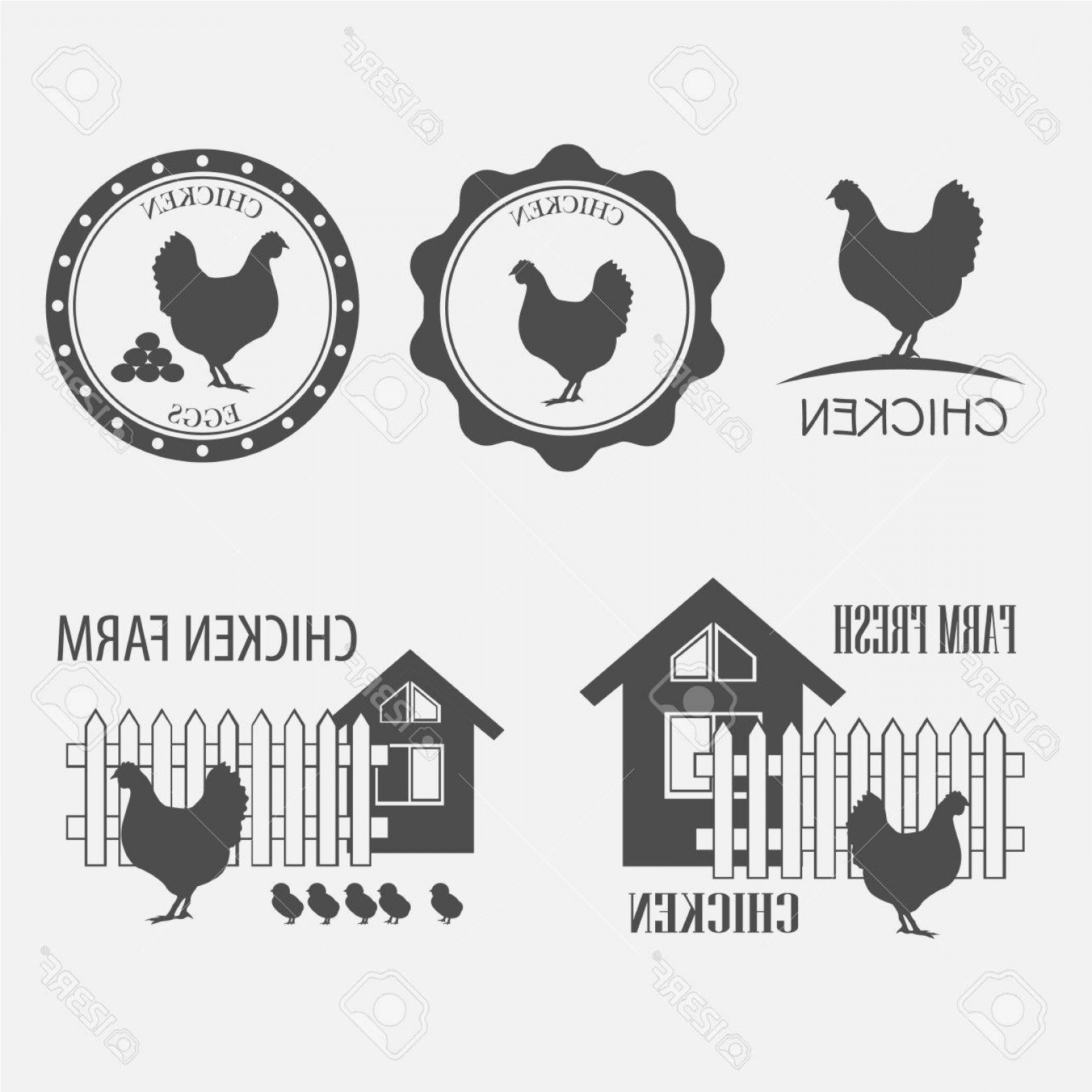 Poultry Vector Art: Photostock Vector Chicken Farm And Chicken Eggs Vector Illustration