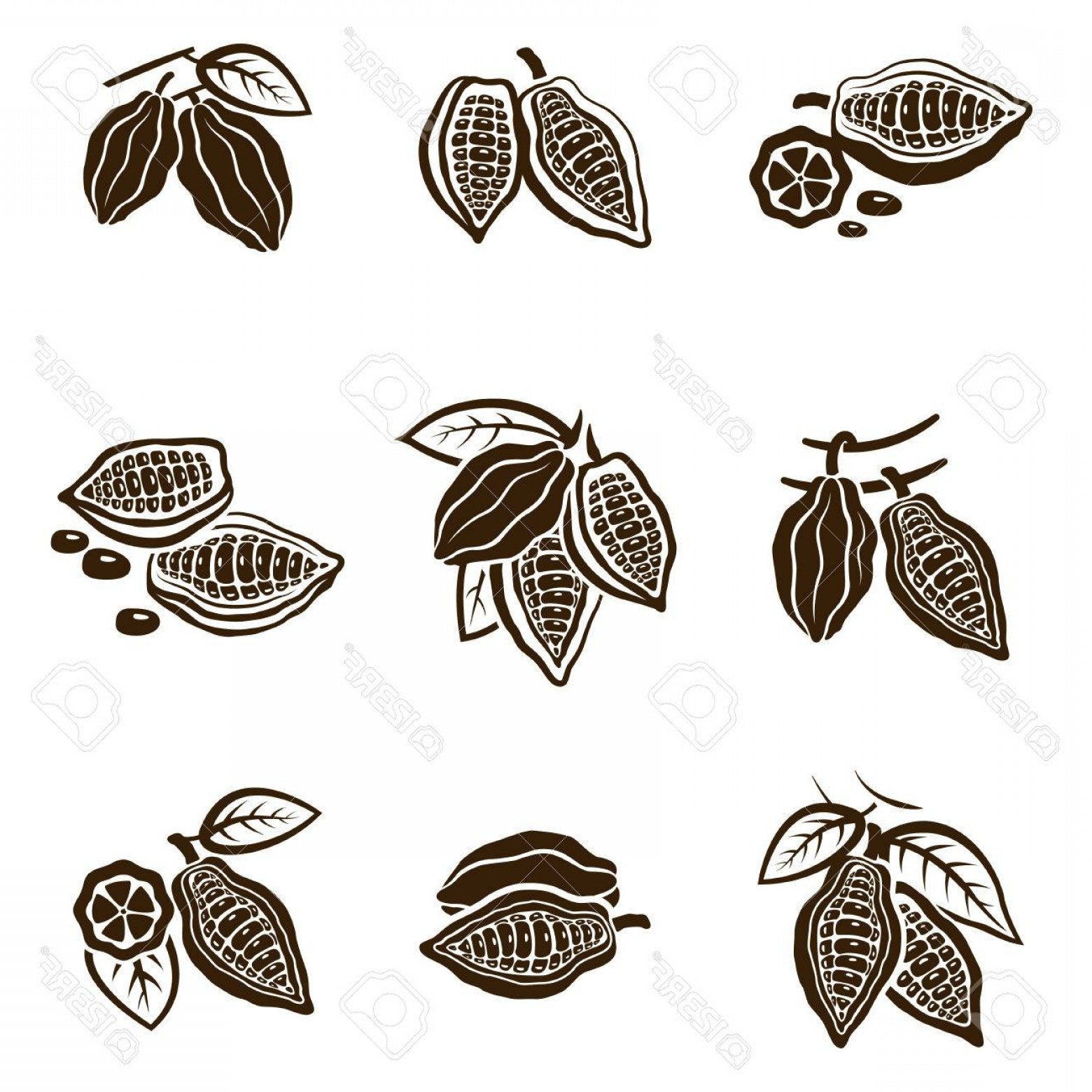 Chocolate Vector Plant: Photostock Vector Cocoa Beans Set Pod With Leaves On A Tree Organic Raw Product To Make Natural Chocolate Vector Flat