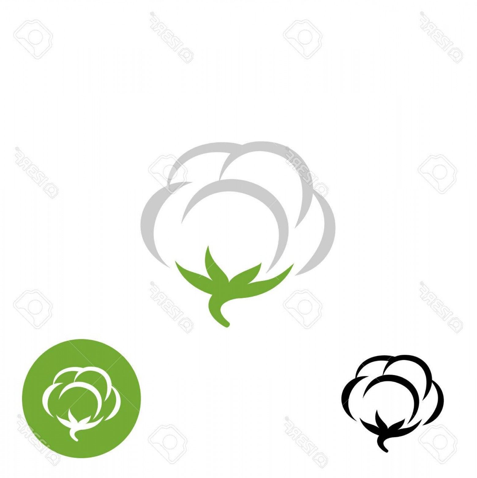 Cotton Vector Graphic: Photostock Vector Cotton Vector Logo With Black And White One Color Variations