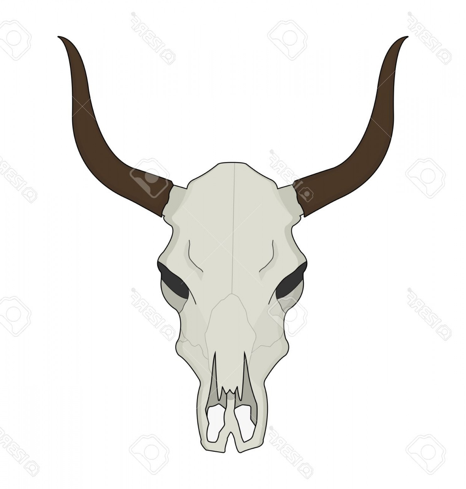 Longhorn Skull Vector: Photostock Vector Cow Skull Wild West Dead Longhorn Head Color Western Vector Illustration Isolated On White
