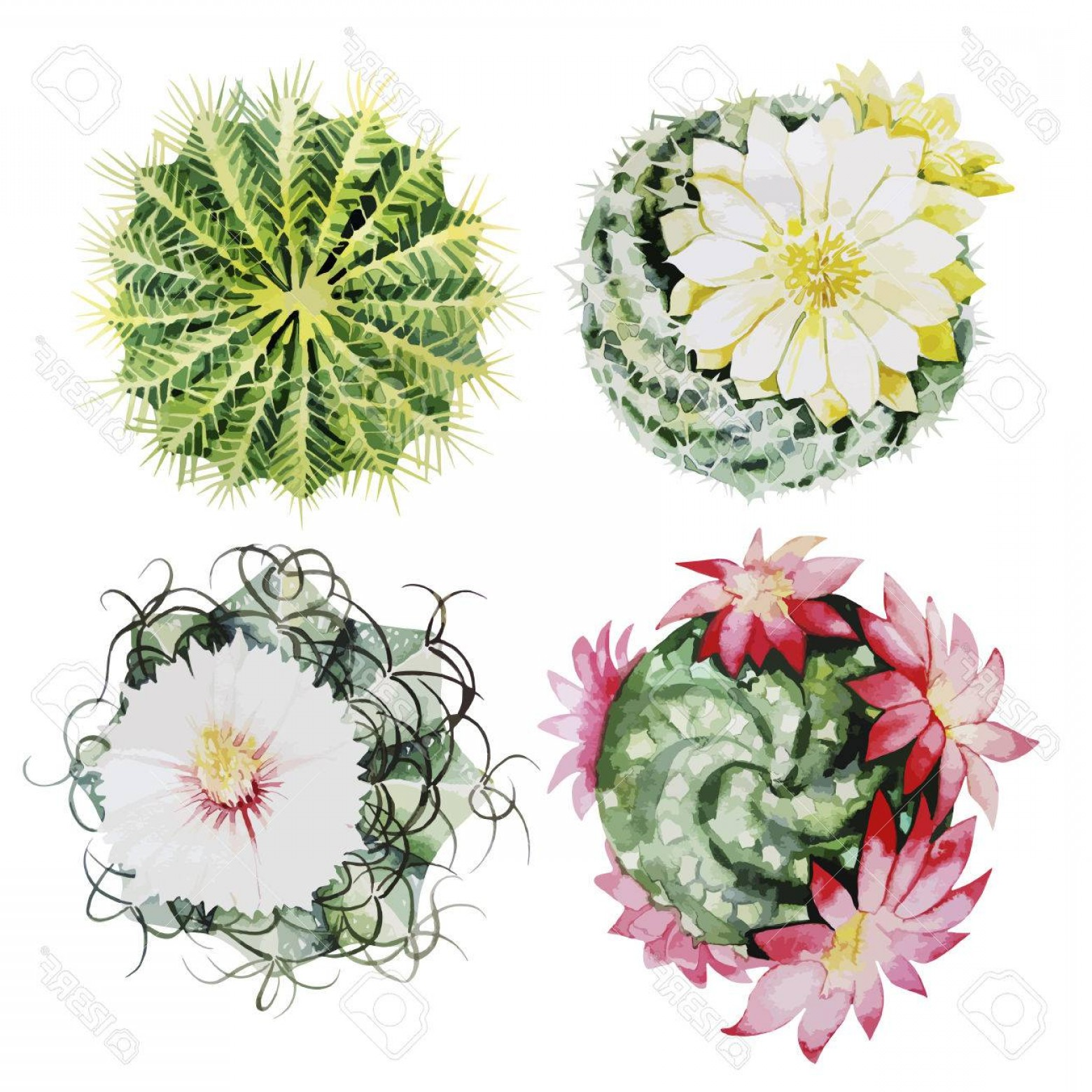 Cactus And Flower Vector: Photostock Vector Cute Watercolor Cactus Set Vector Floral Design Elements Isolated On White Background