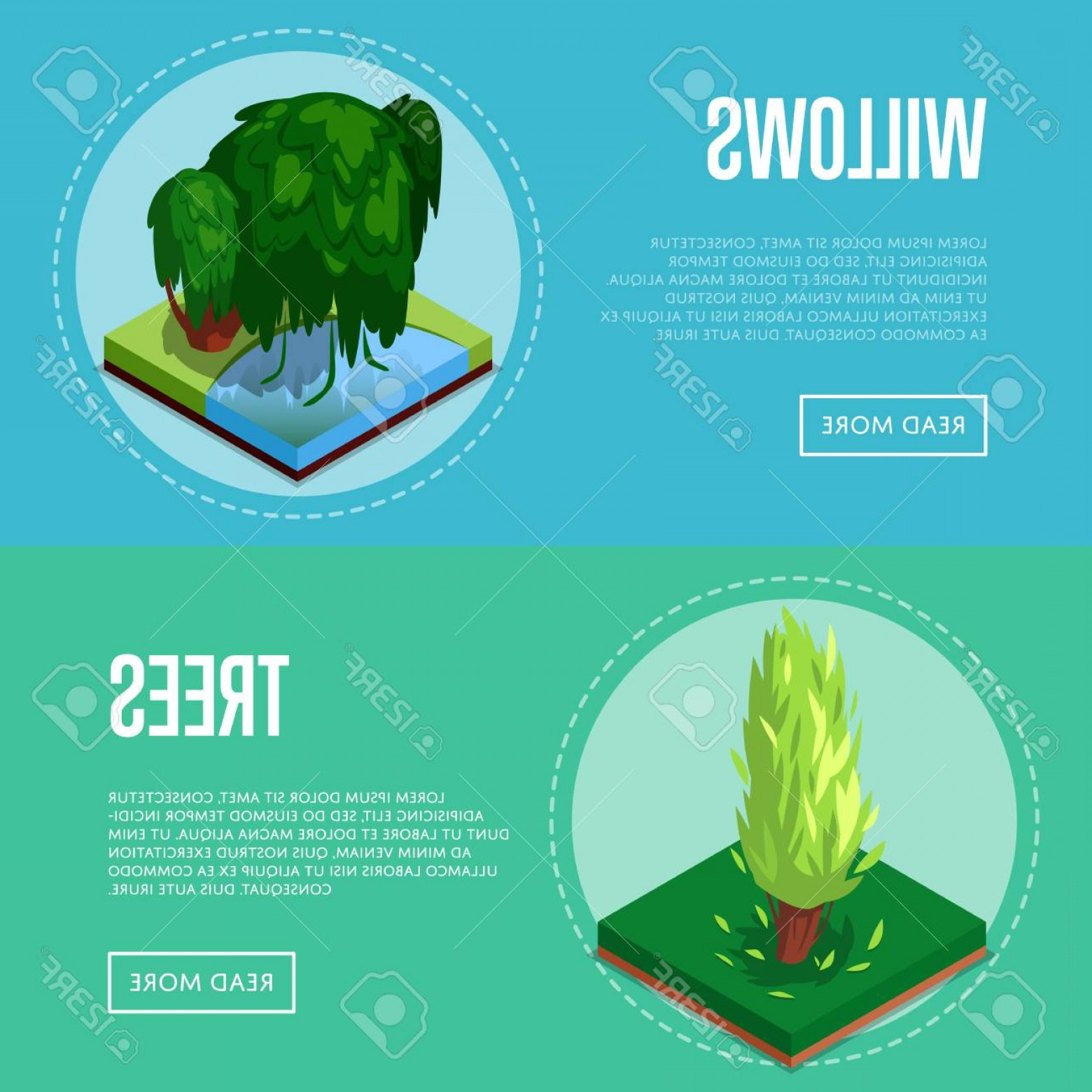 Vector Natural Willow: Photostock Vector Decorative Plants For Park Design Isometric Posters Poplar And Willow Tree In Green Grass D Element