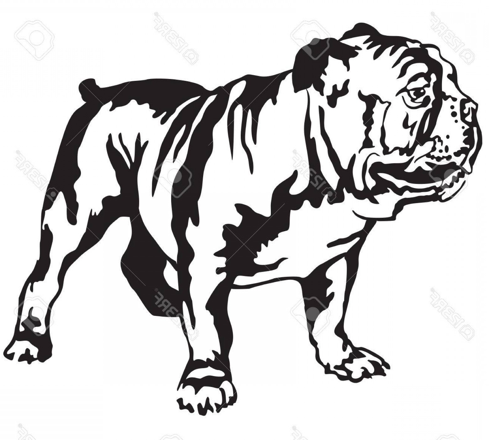 Bulldog Vector Art: Photostock Vector Decorative Portrait Of Standing In Profile English Bulldog Vector Isolated Illustration In Black Col