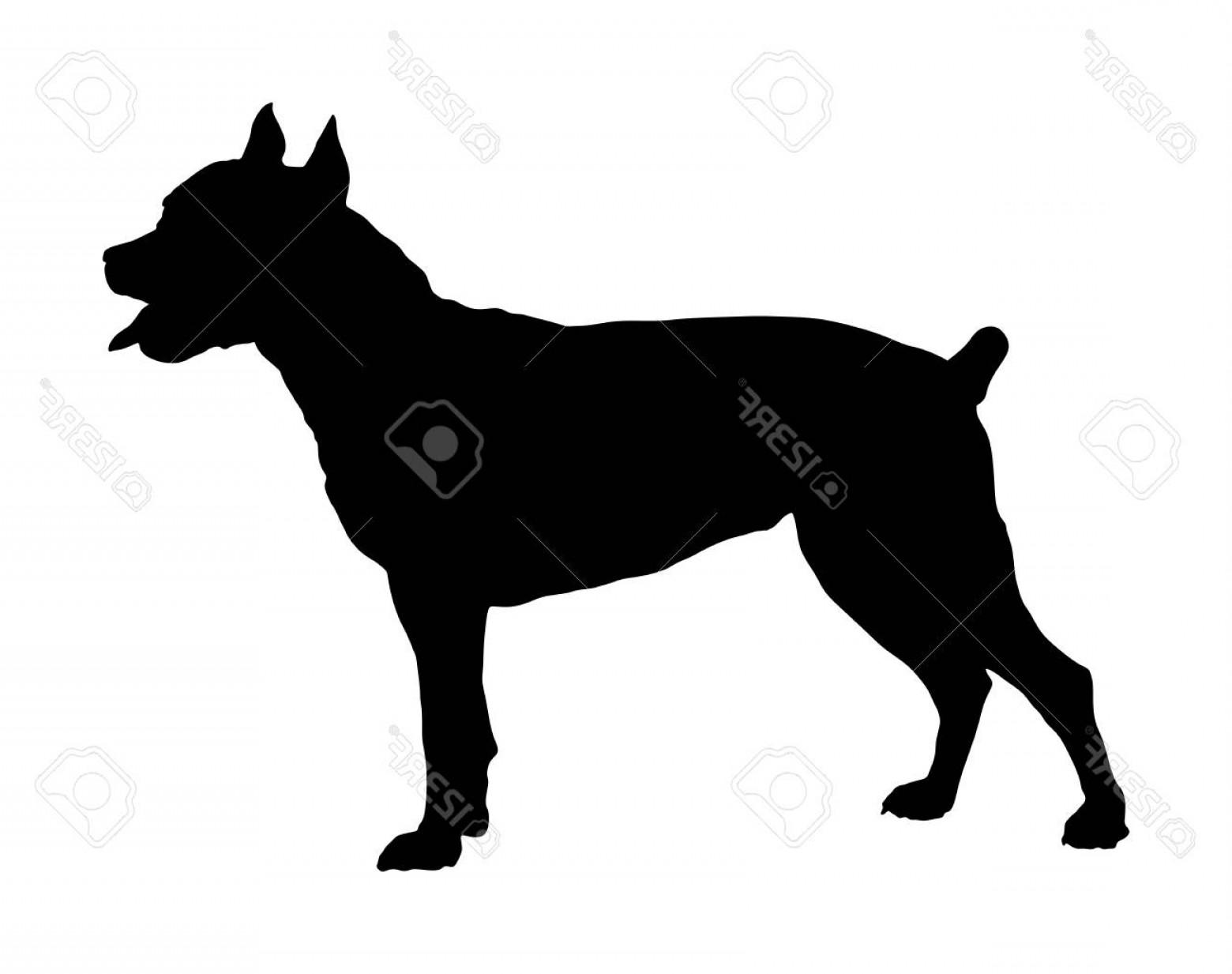 Pit Silhouette Vector: Photostock Vector Dog Portrait Of American Staffordshire Pit Bull Terrier Vector Silhouette Illustration Isolated