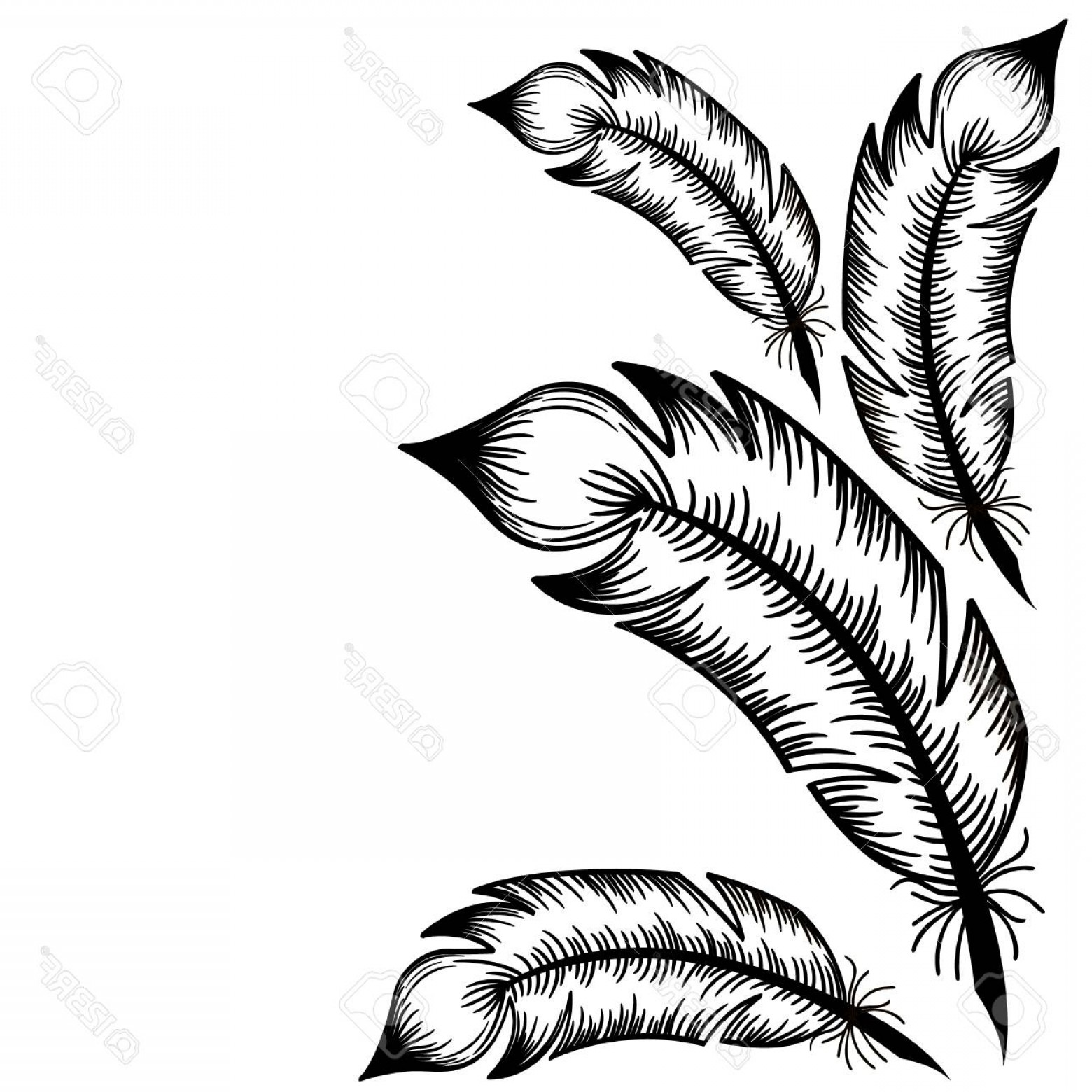 Vector Drawing Feathers: Photostock Vector Drawing Of Black Feathers On A White Background Vector Sticker