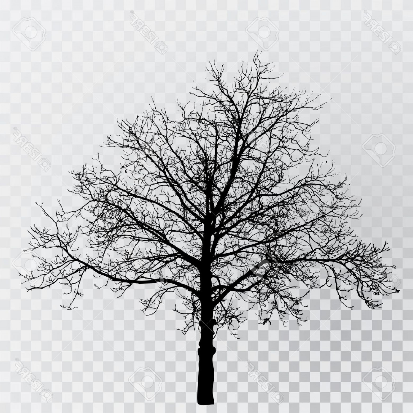 Winter Tree Silhouette Vector: Photostock Vector Drawing Of The Transparent Silhouette Winter Tree