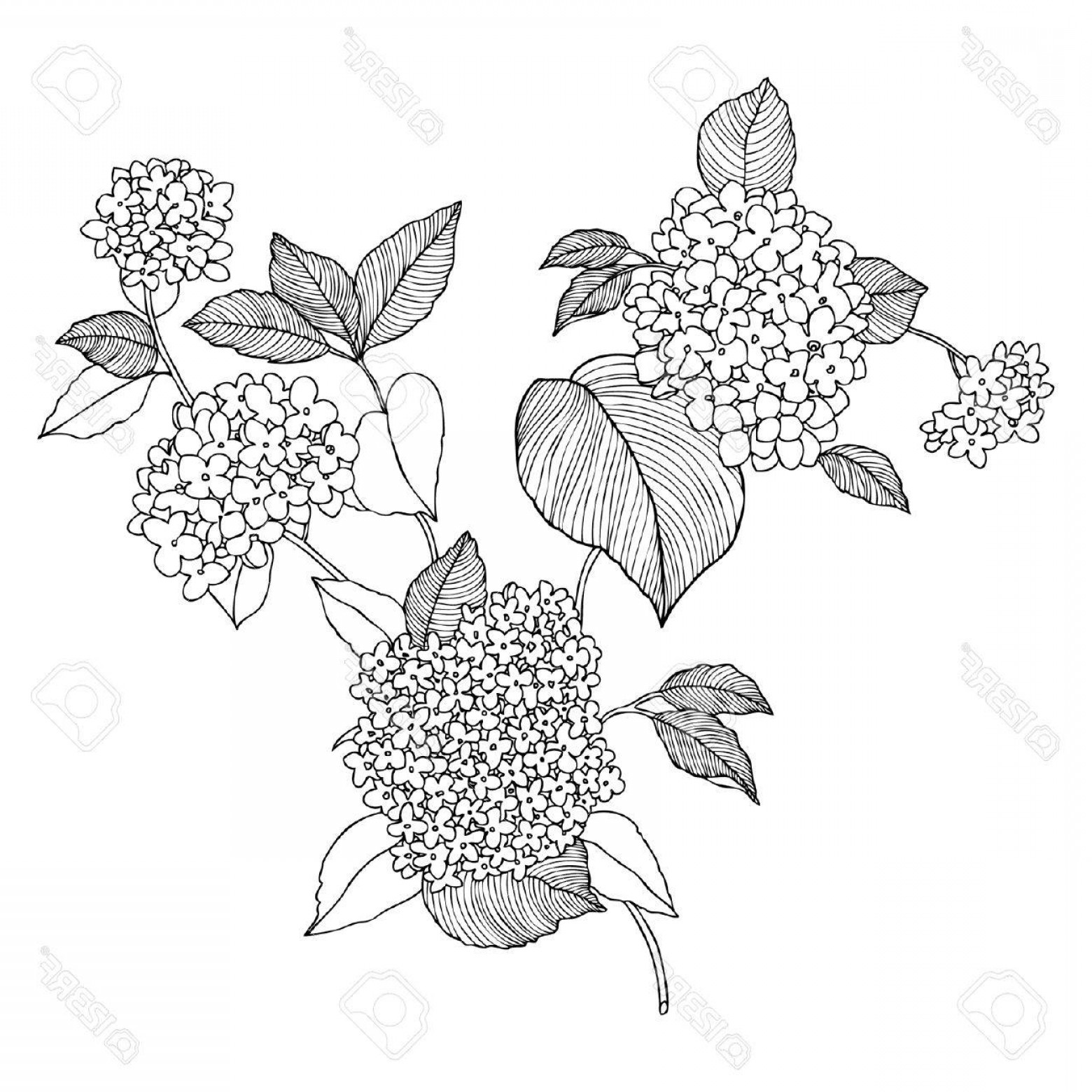 Lilac Vector Drawing: Photostock Vector Elegance Seamless Pattern With Flowers Of Lilac Vector Floral Illustration In Vintage Style