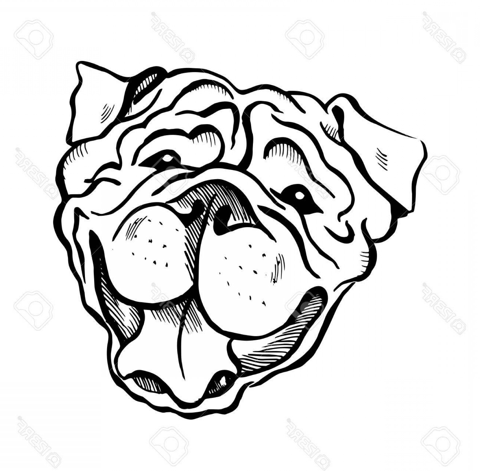 Vector Smiling Bulldog: Photostock Vector English Bulldog Smiling Dog Face Portrait Sketch Black And White Vector Illustration