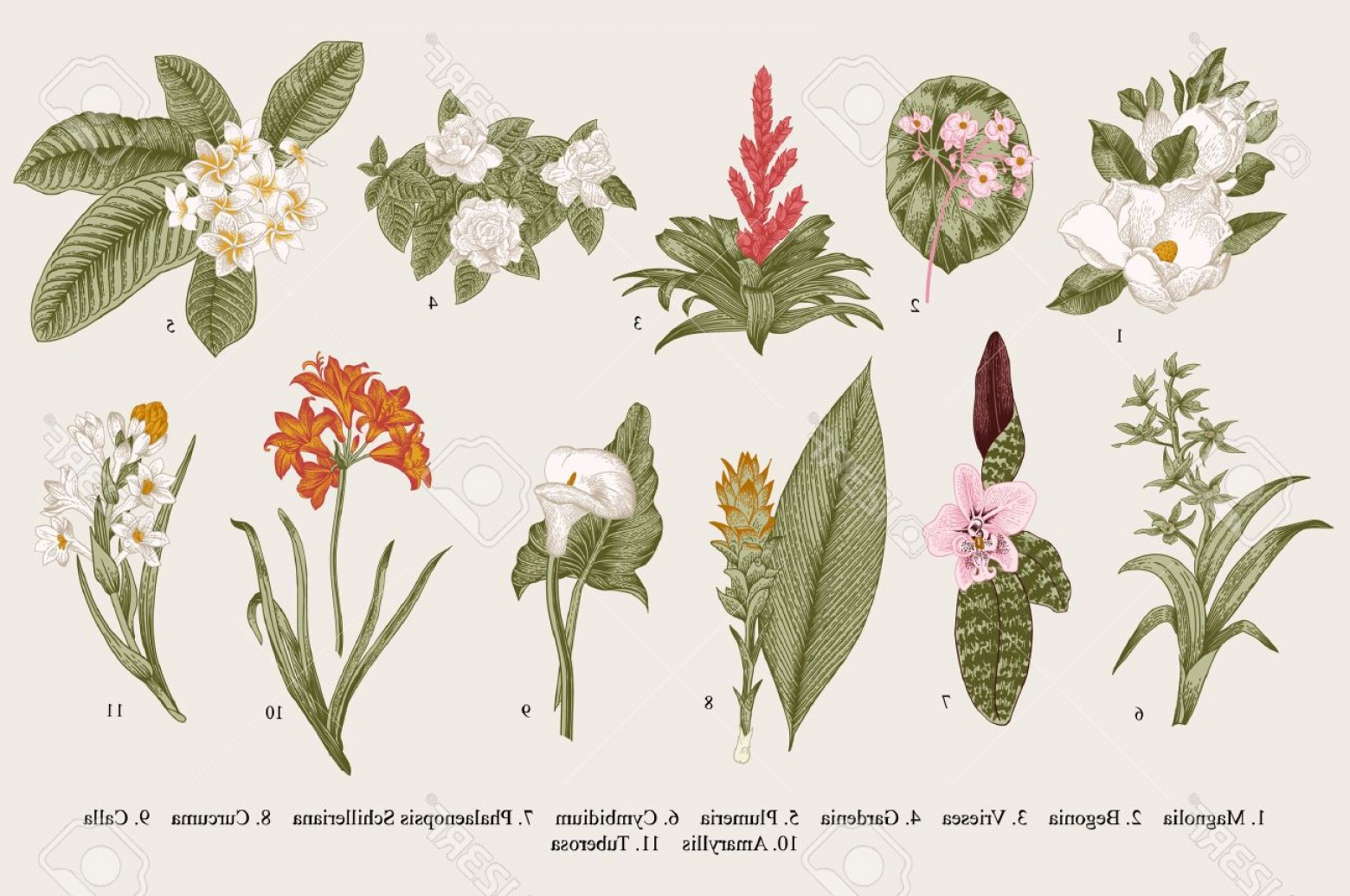 Botanical Flower Vectors: Photostock Vector Exotic Flowers Set Botanical Vector Vintage Illustration Design Elements Colorful