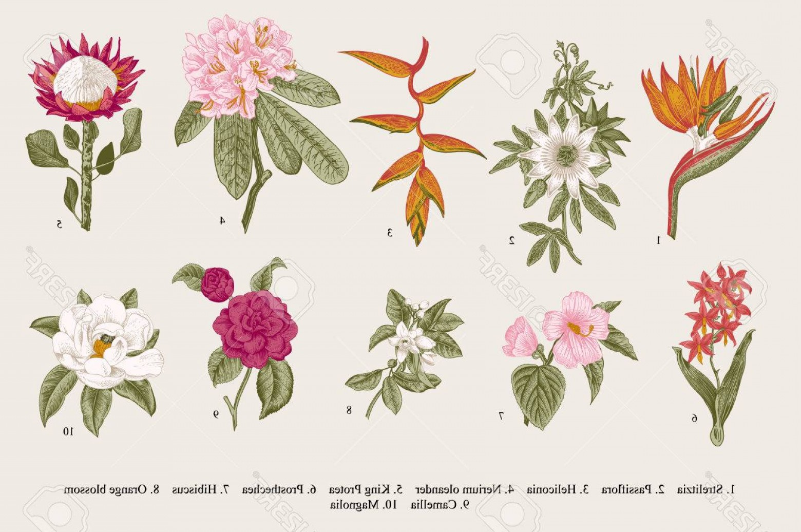 Botanical Flower Vectors: Photostock Vector Exotic Flowers Set Botanical Vintage Illustration