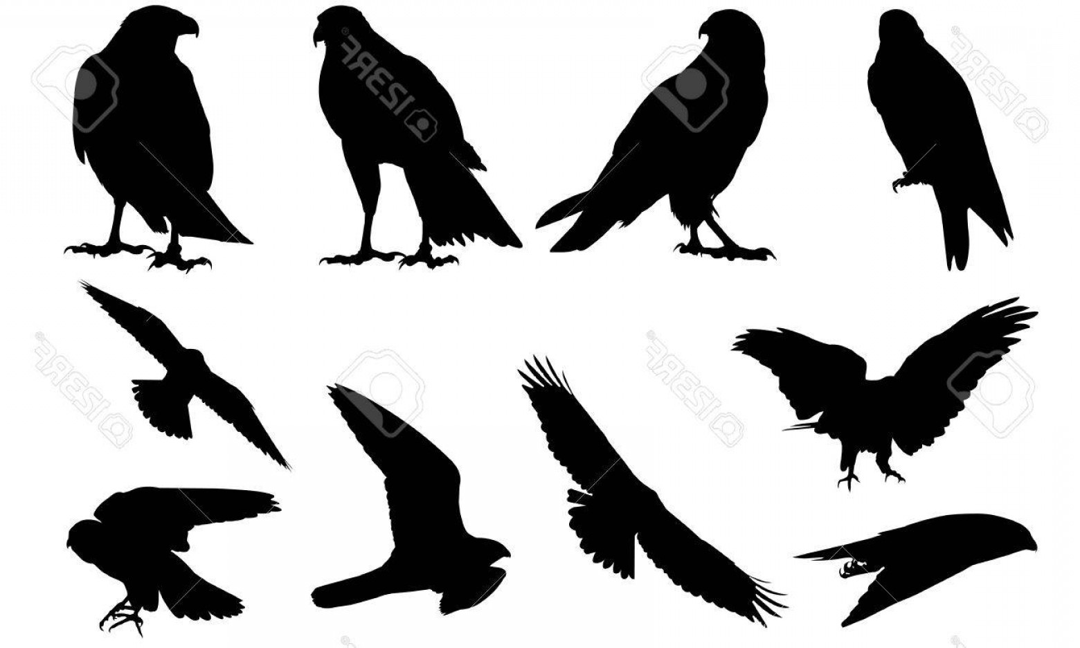 Falcon Silhouette Vector: Photostock Vector Falcon Silhouette Vector Illustration