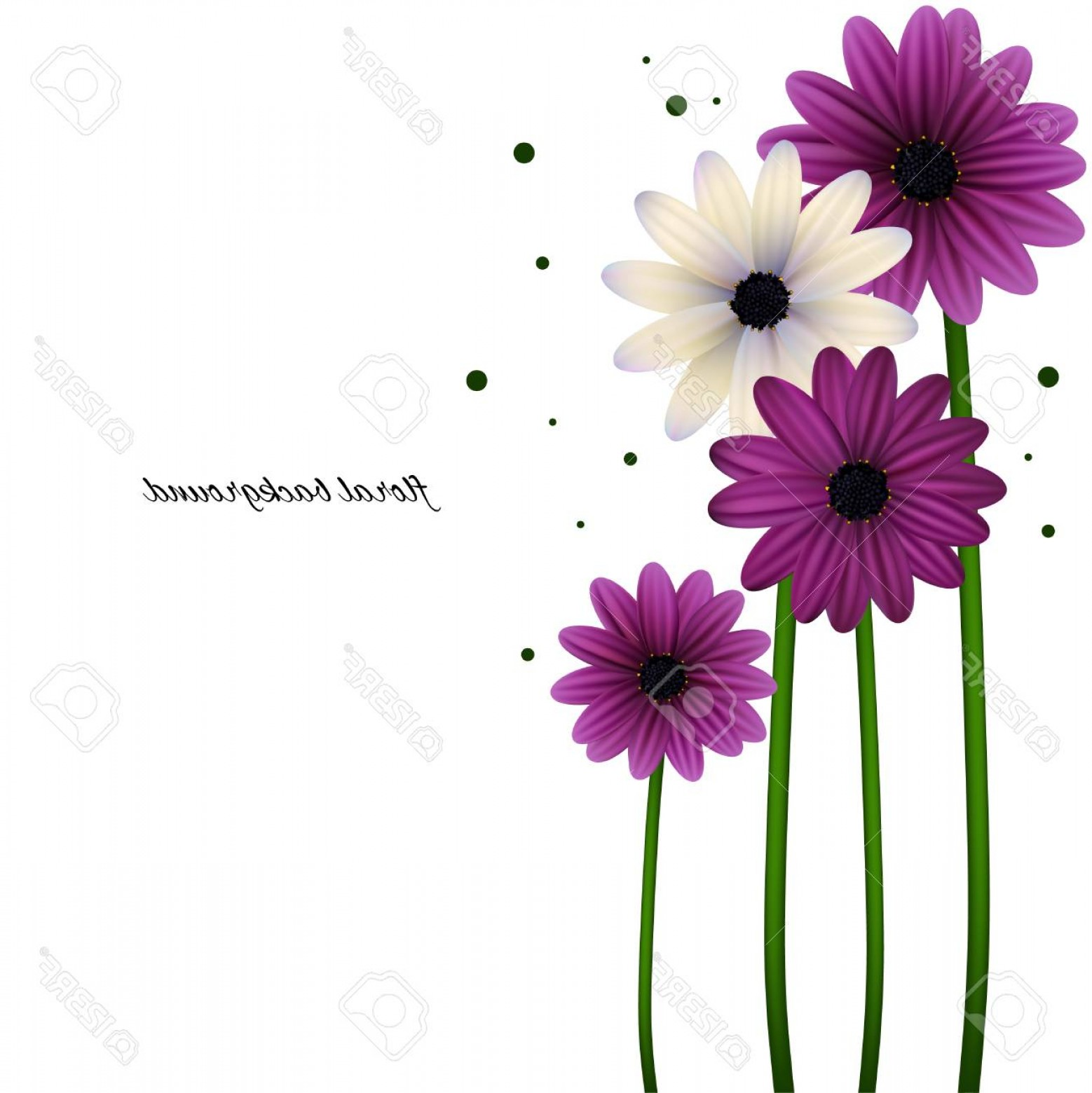 Purple Gerber Daisy Vector Framw: Photostock Vector Floral Background Can Be Use For Frames And Cards Gerberas Daisies Plants Flora Vector Illustration