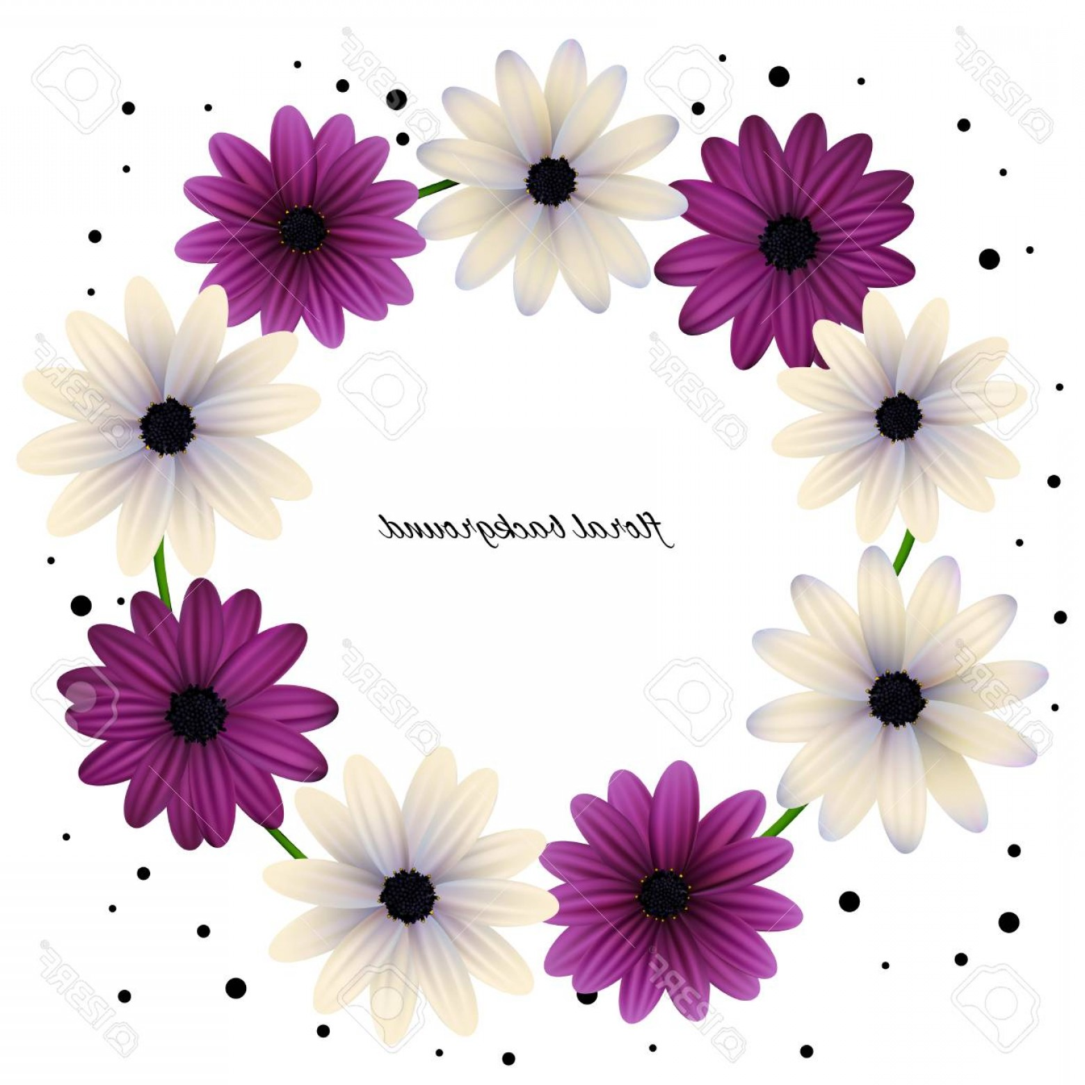 Purple Gerber Daisy Vector Framw: Photostock Vector Floral Wreath Background Can Be Use For Frames And Cards Gerberas Daisies Plants Flora Vector Illust