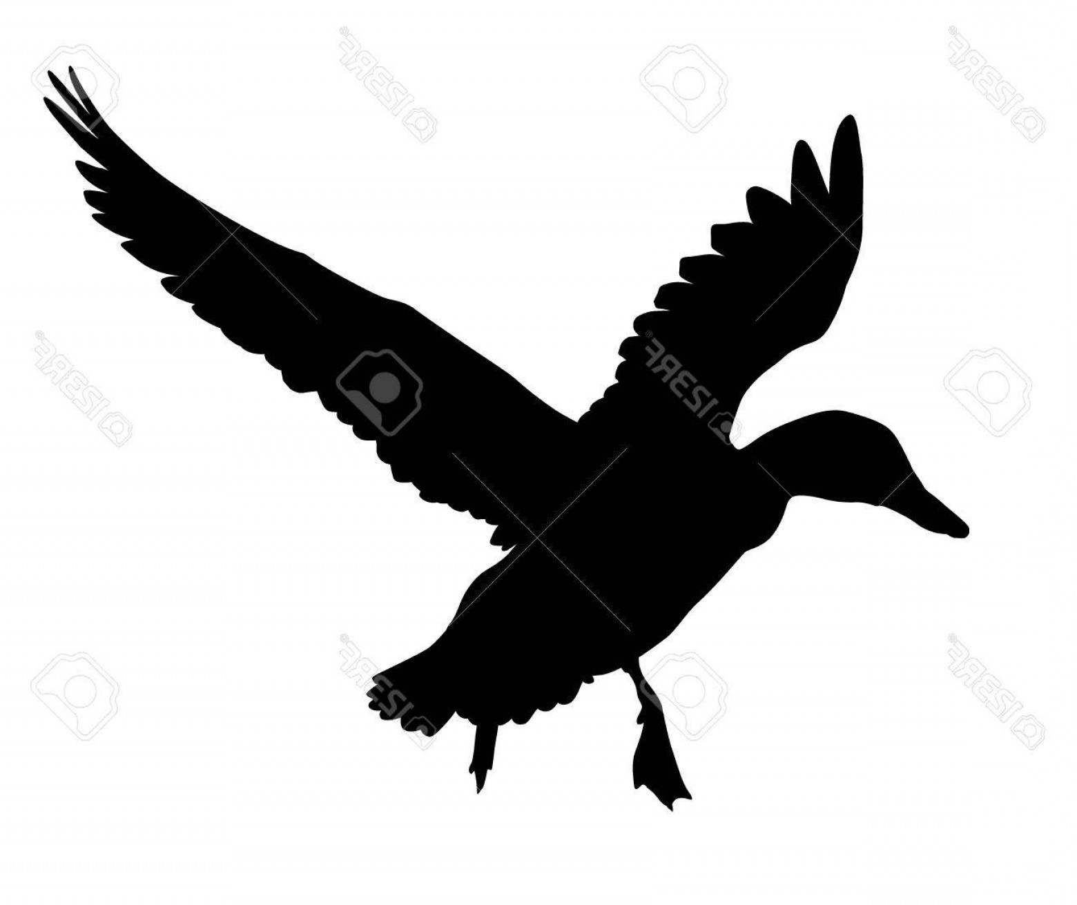 Flying Duck Outline Vector: Photostock Vector Flying Duck Silhouette Vector Eps