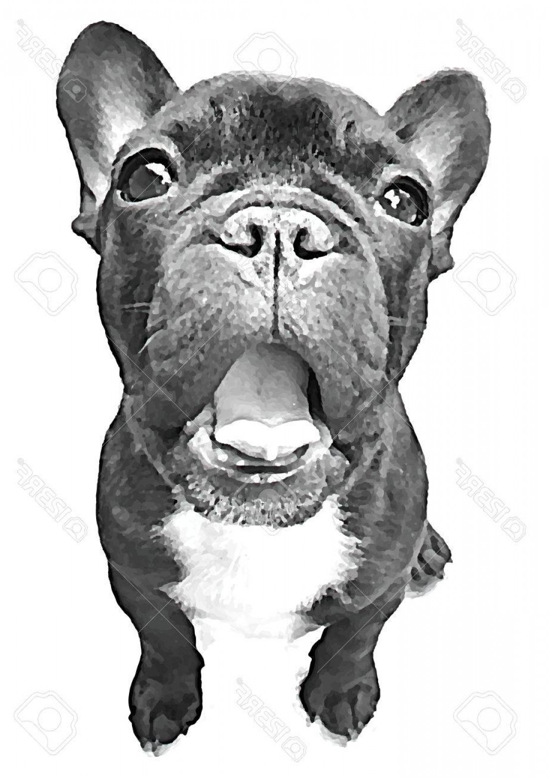 Vector Smiling Bulldog: Photostock Vector French Bulldog Pet Smile Vector