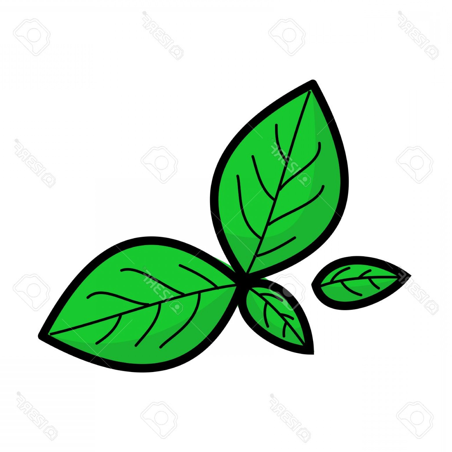 Basil Vector: Photostock Vector Fresh Green Leaves Of Basil And Spinach