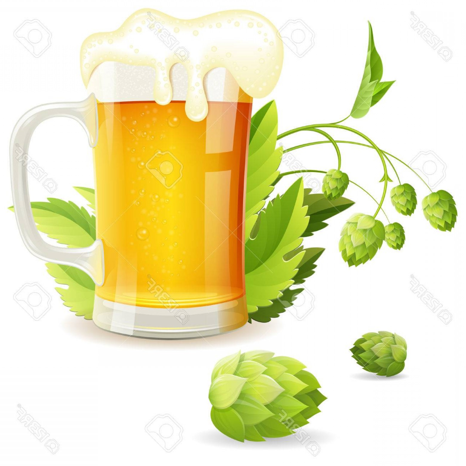 Beer Hops Vector: Photostock Vector Glass Of Beer With Hops Vector Isolated On White Background