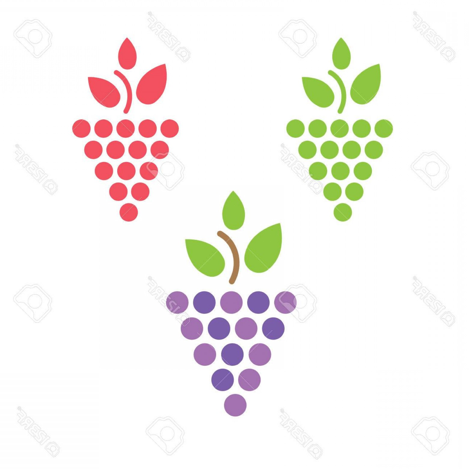 Vine Vector Graphics: Photostock Vector Grapes Vector Isolated Grapes Icon Grapes Logo Grapes Wine Or Grapes Vine Grapes With Green Leaf Iso
