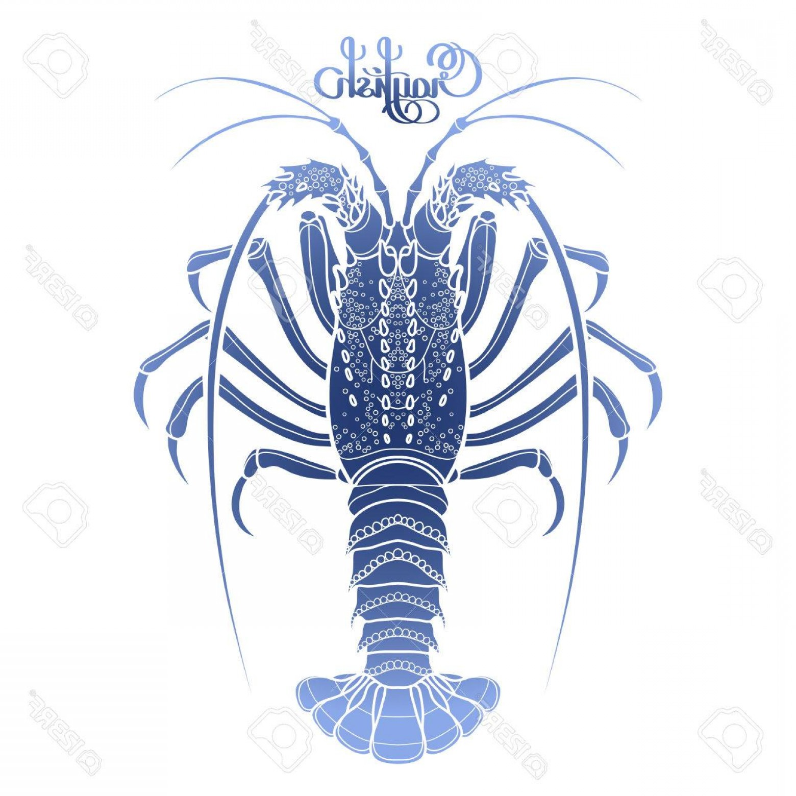 Lobster Clip Art Vector: Photostock Vector Graphic Vector Crayfish Drawn In Line Art Style Spiny Or Rocky Lobster Sea And Ocean Creature In Blu